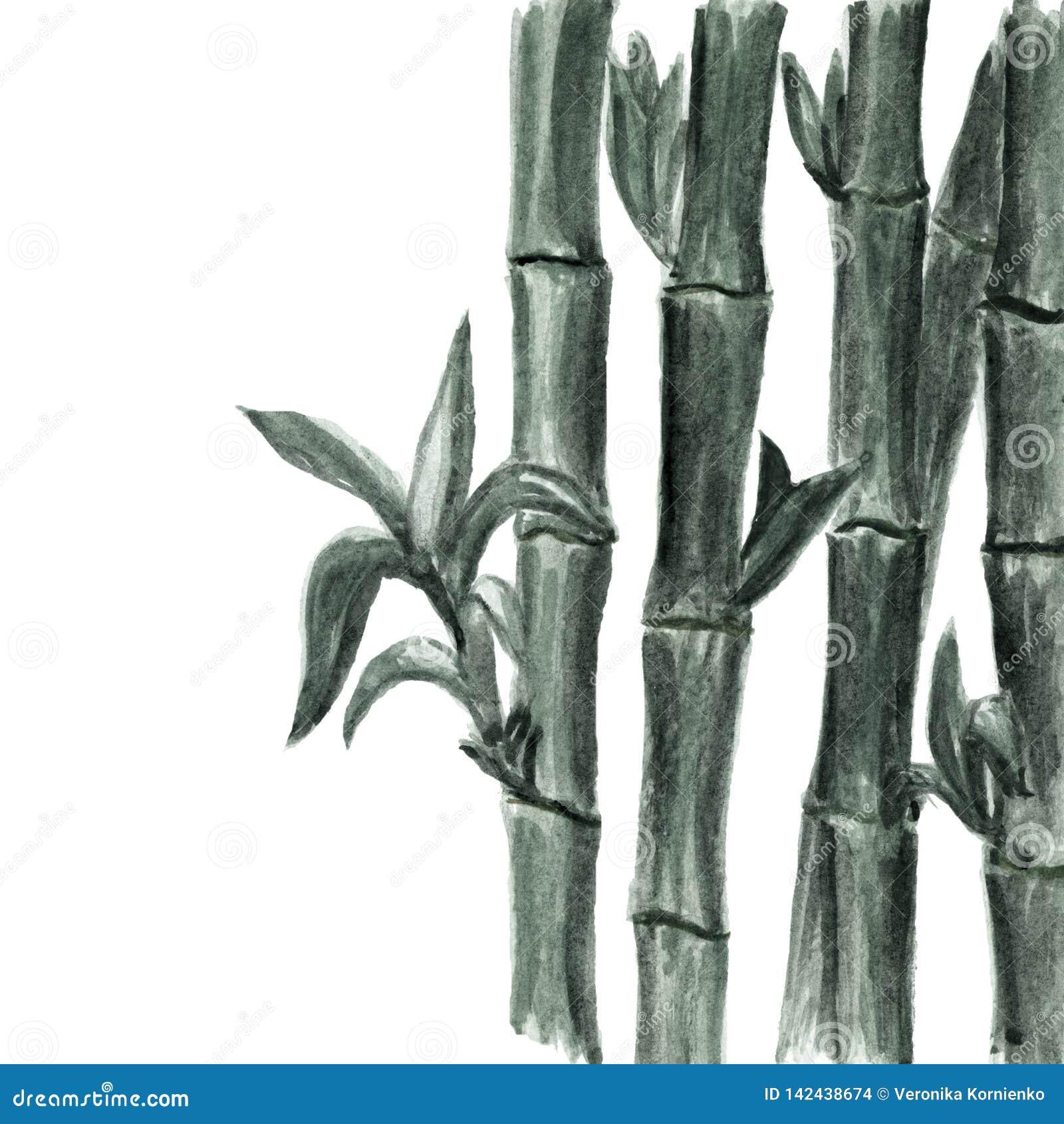Monokrom bambubakgrund för vattenfärg