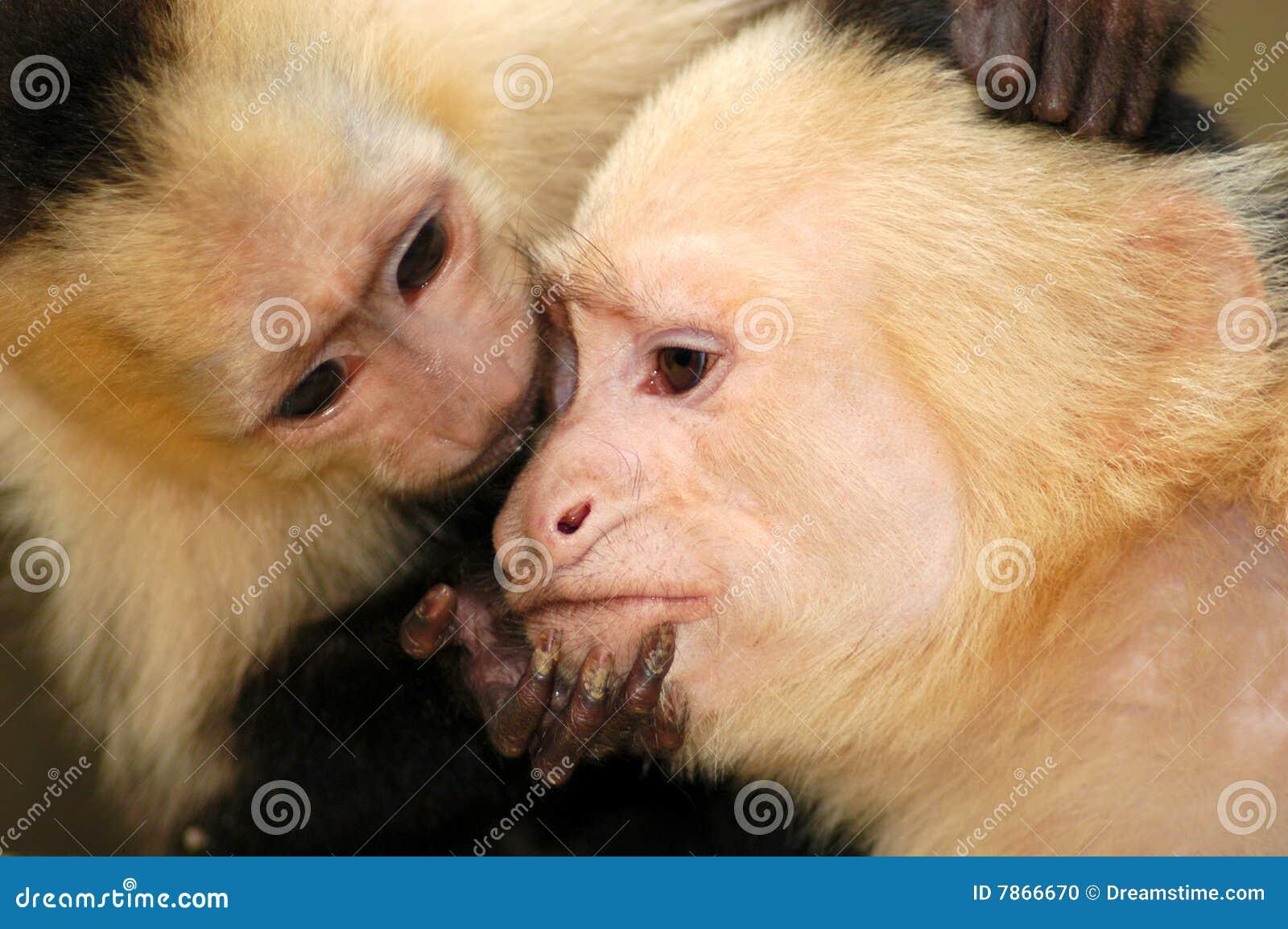 Monos de araña