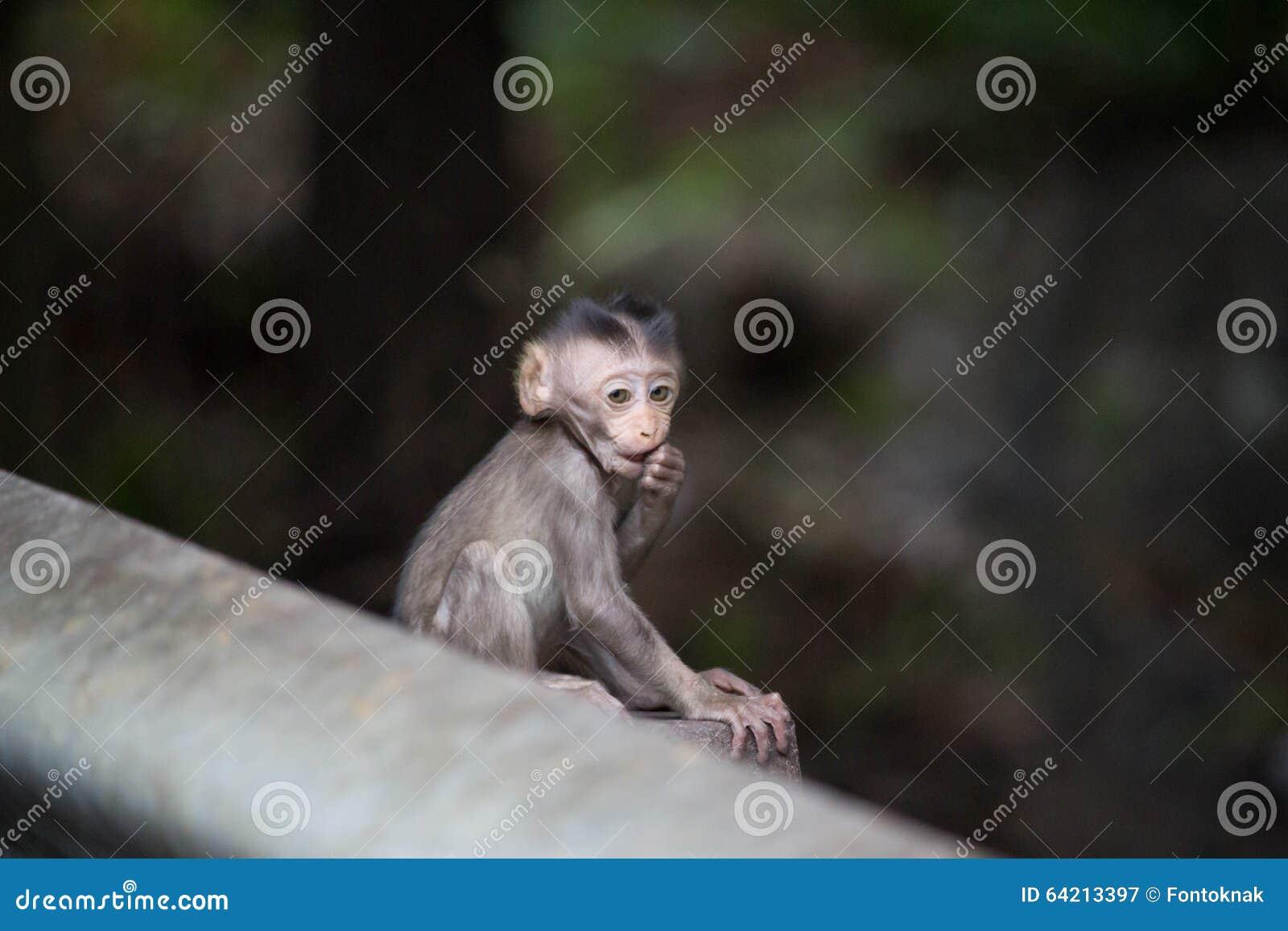 Monos lindos