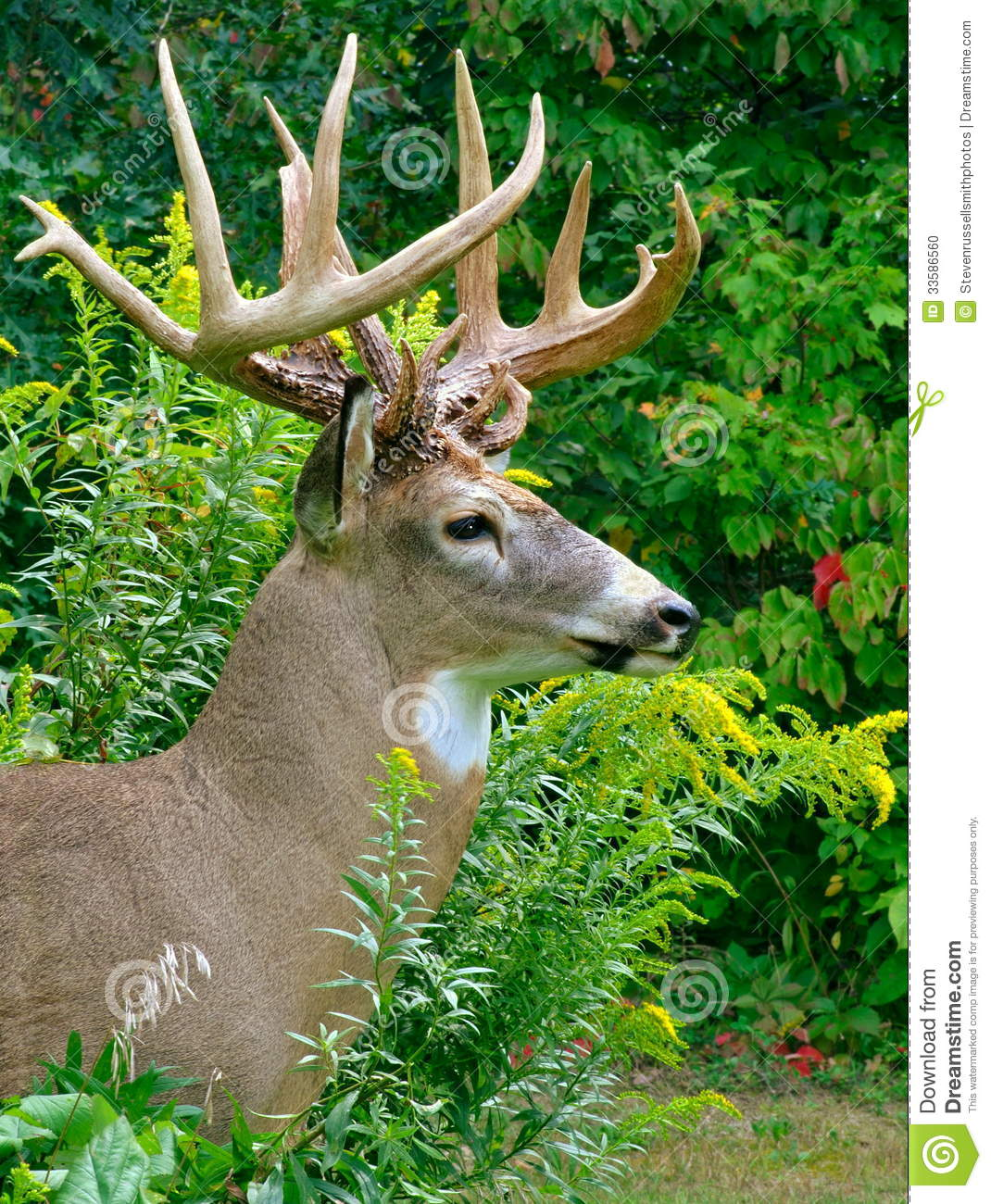 Monster Buck Profile View Stock Photo. Image Of Sixteen