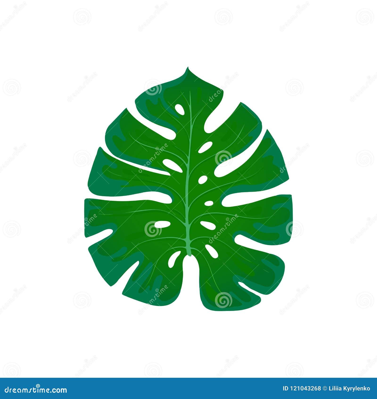 Monstera del follaje Elemento de la tendencia del diseño de hoja de palma en un blanco Exótico tropical y plantas