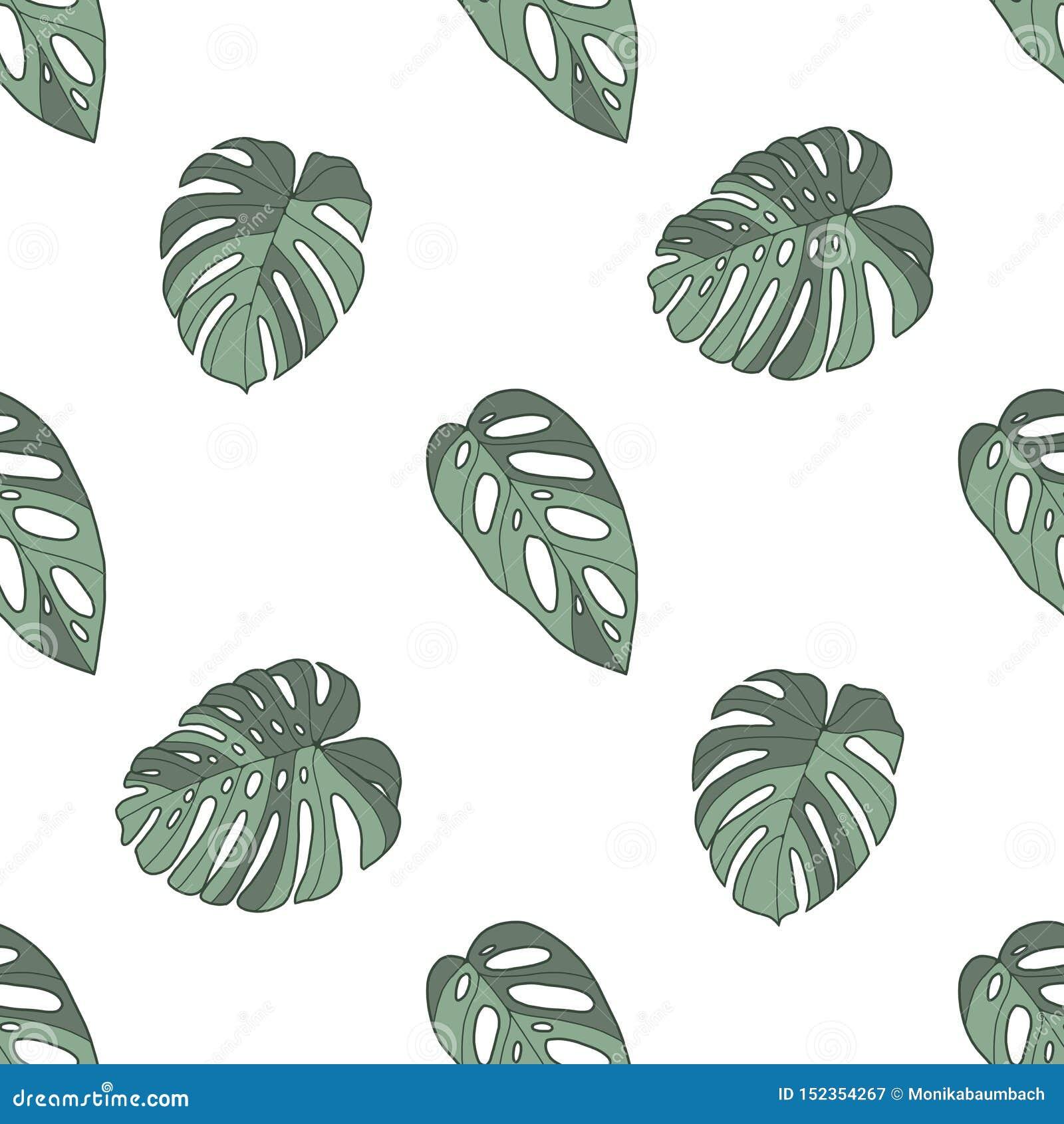 Monstera deliciosa, acuminata i obliqua windowleaf tropikalnej rośliny bezszwowy wzór na białym tle,