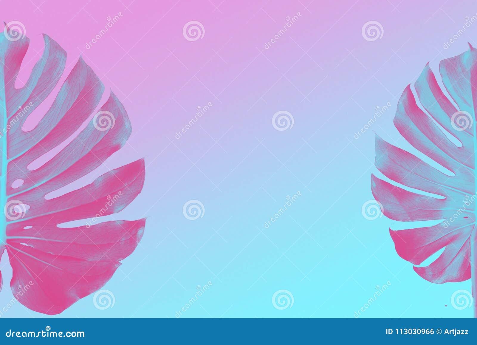 Monstera dos hojas como frontera en el fondo ultravioleta, rosado y azul del duotone