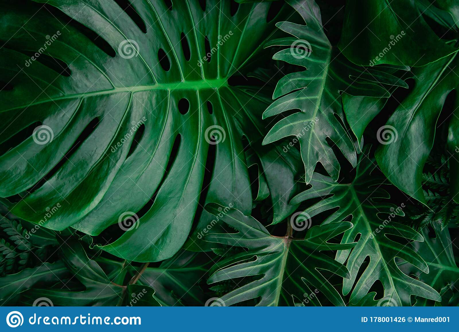 Tropical Leaves Abstract Green Leaves Texture Nature Background Stock Photo Image Of Backgrounds Garden 178001426 Learn how to design like a pro with fonts, colour and layout. tropical leaves abstract green leaves texture nature background stock photo image of backgrounds garden 178001426