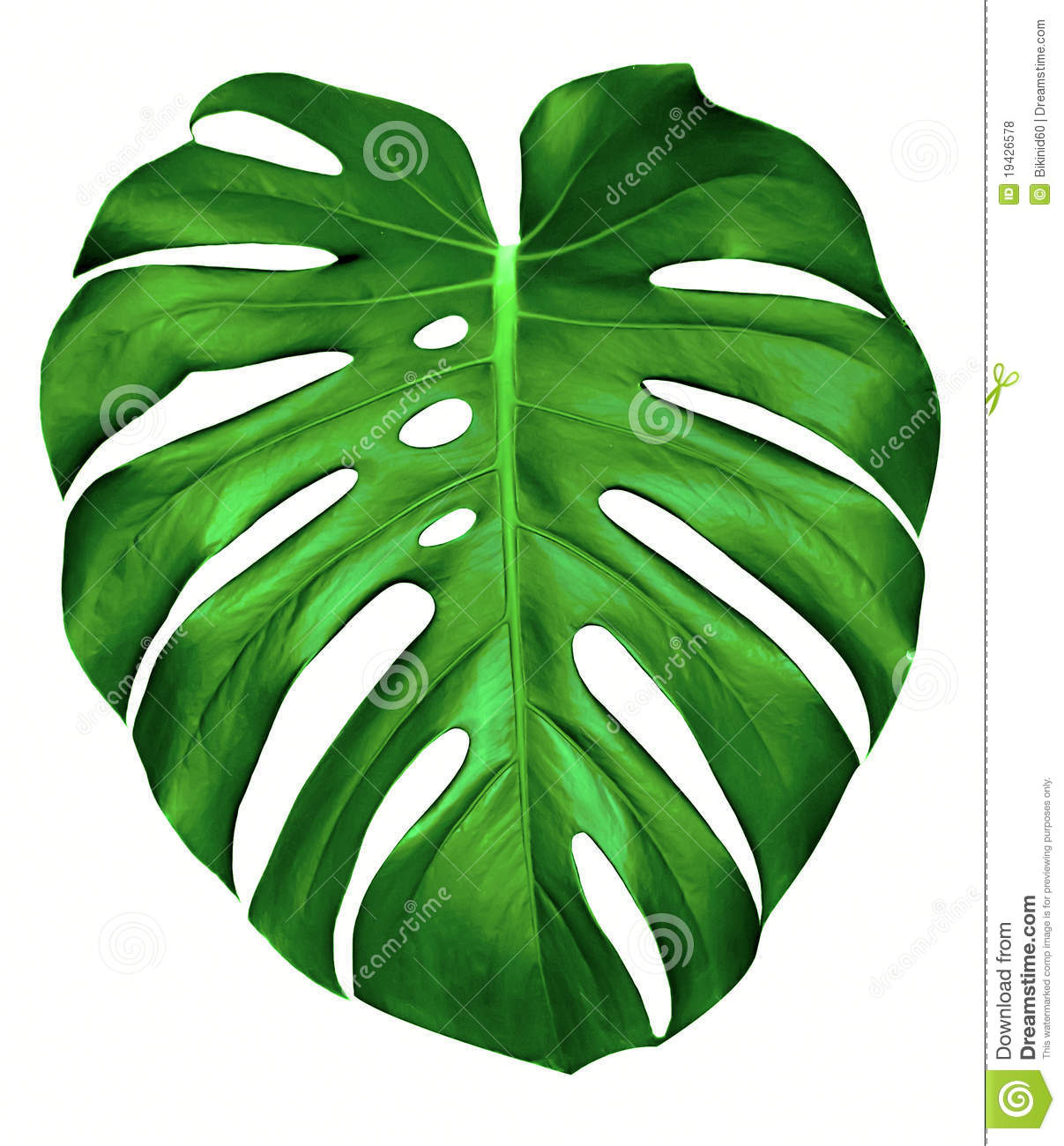 Monstera Leaf. Royalty Free Stock Photos - Image: 19426578
