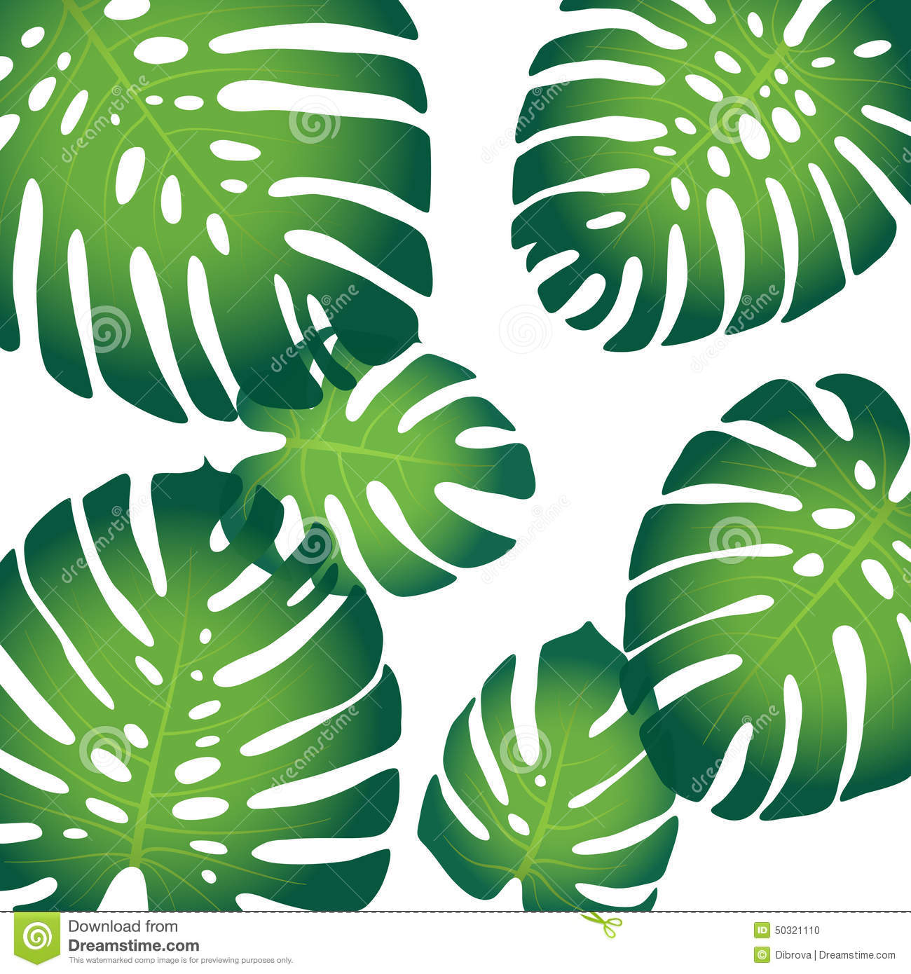 Monstera Leaves Stock ...