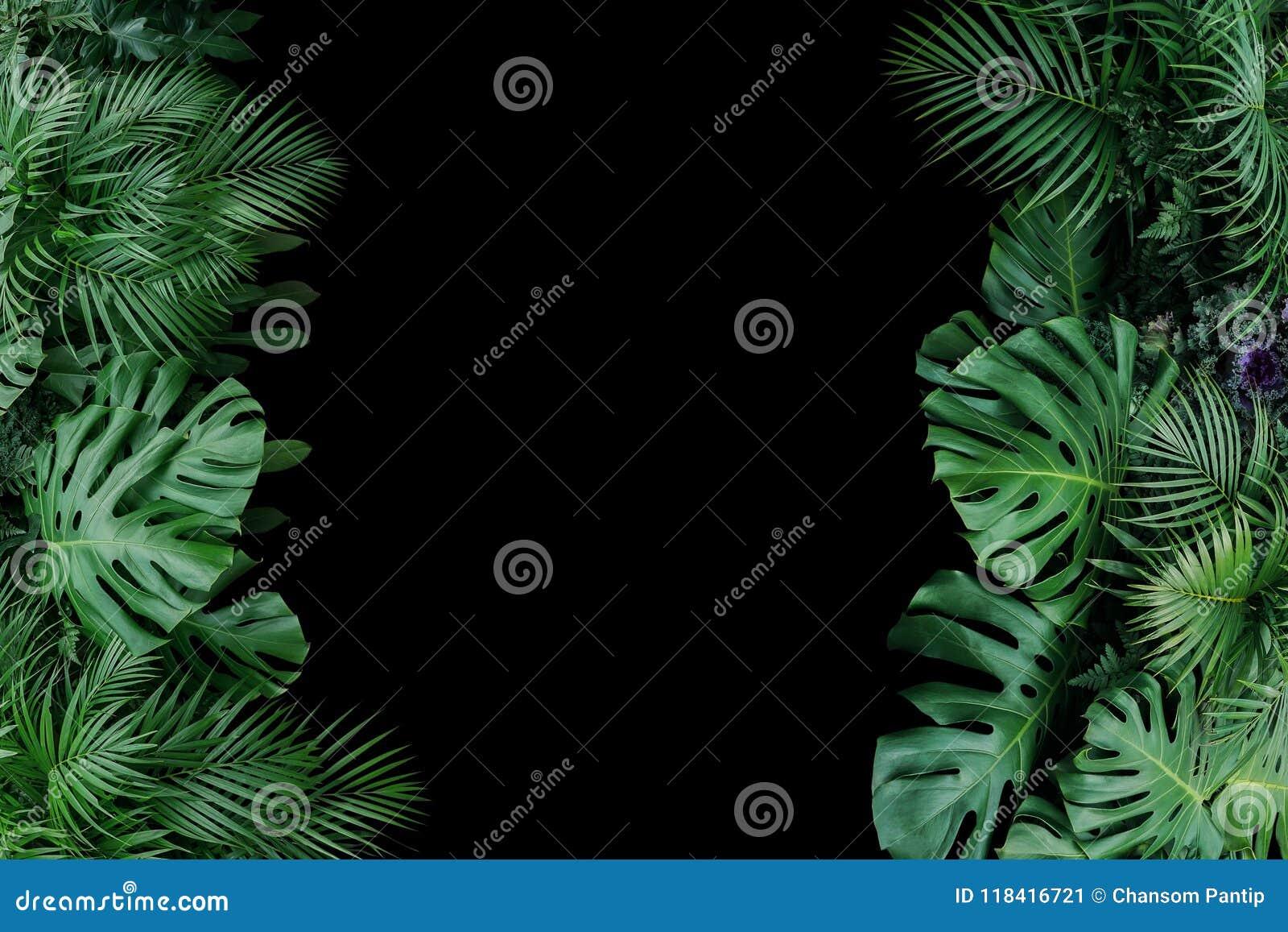 Monstera, ormbunke och för lövverkväxt för palmblad tropisk natu för buske