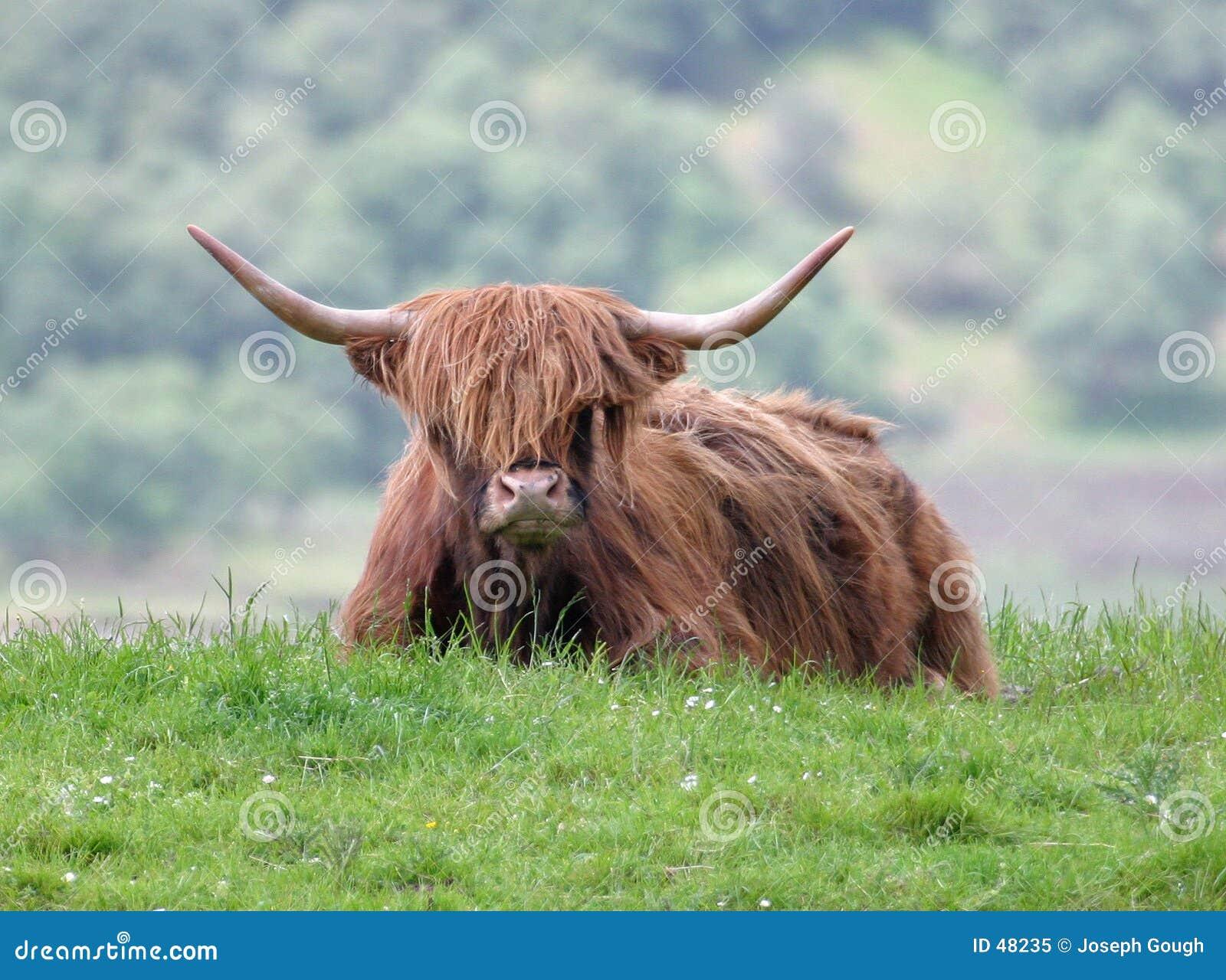 Montaña Bull
