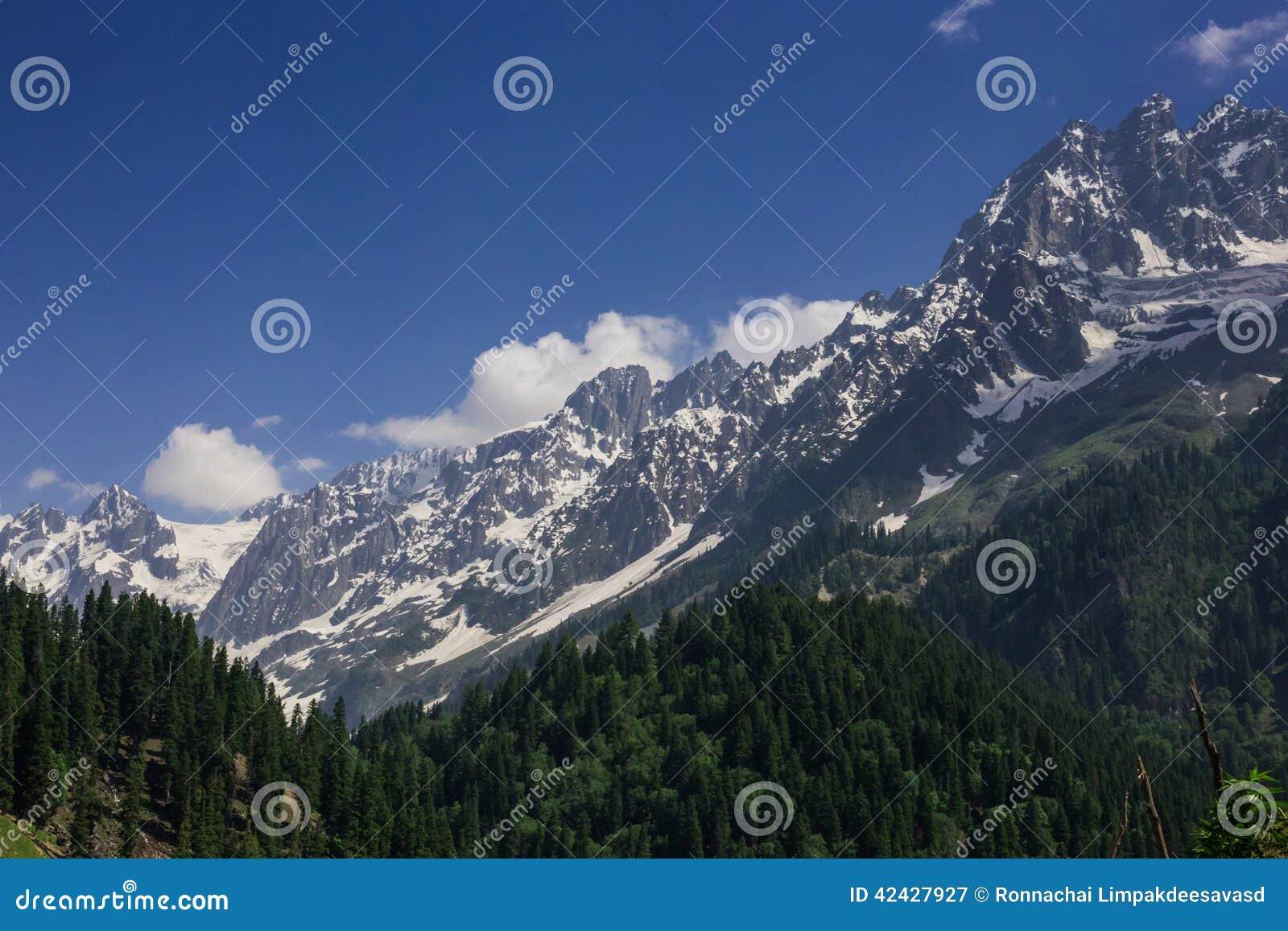 Montaña de la nieve con el bosque del pino