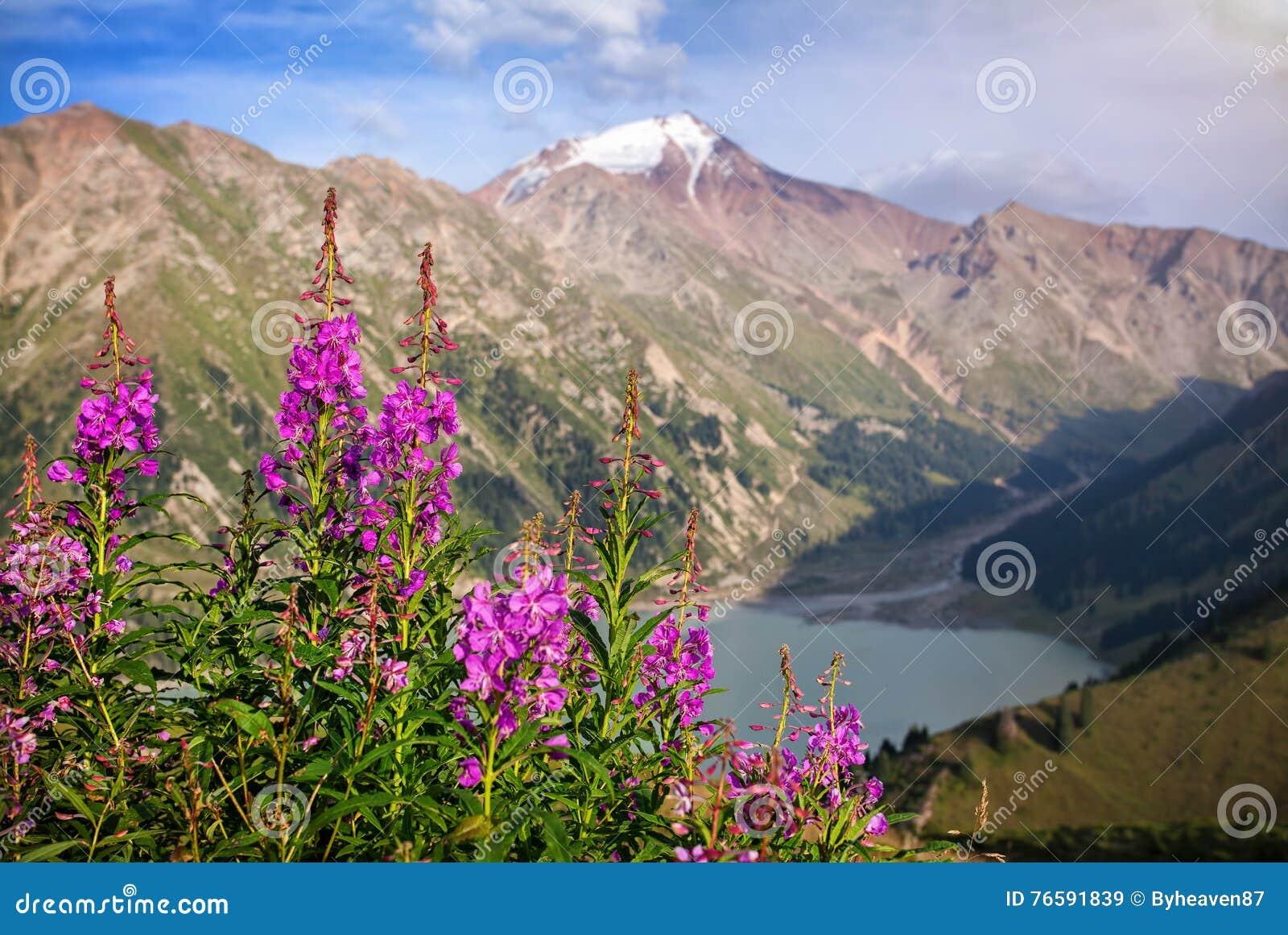 Montañas Nevado y flores rosadas