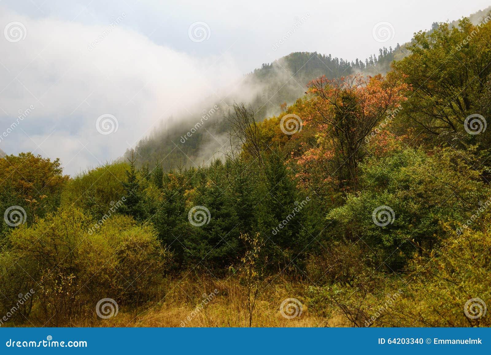 Montañas y bosque en el valle Jiuzhaigou