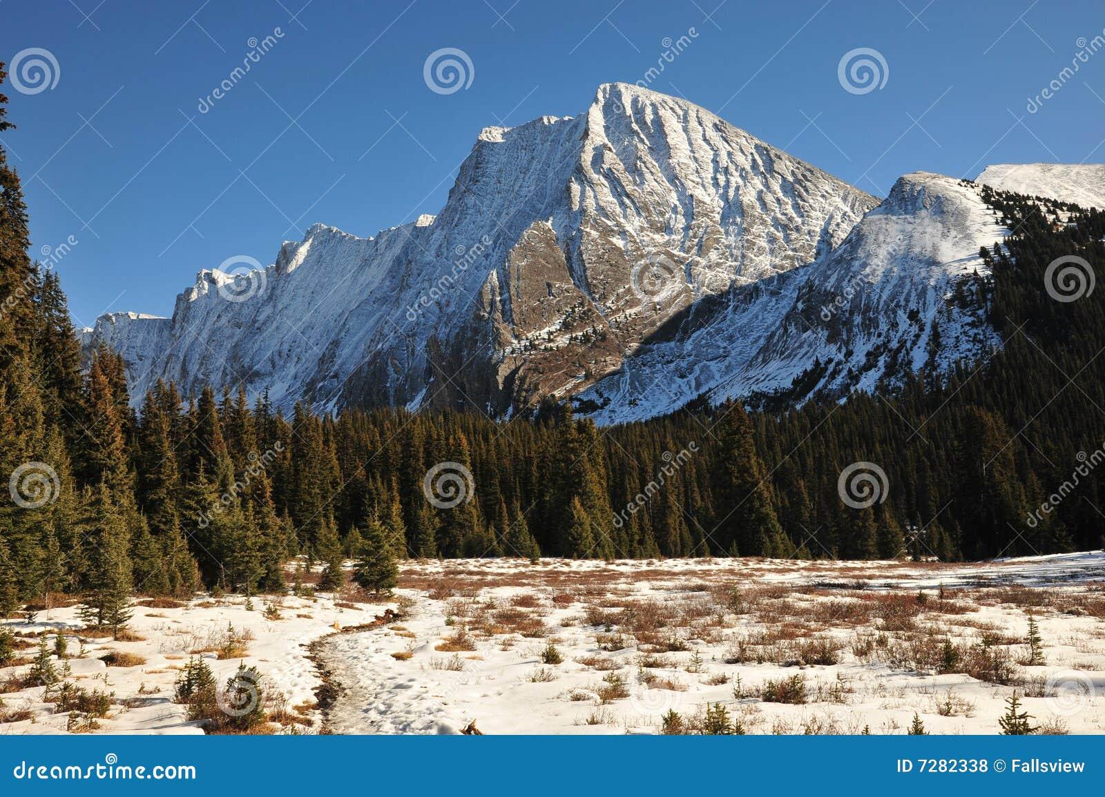 Montañas y bosques de la nieve