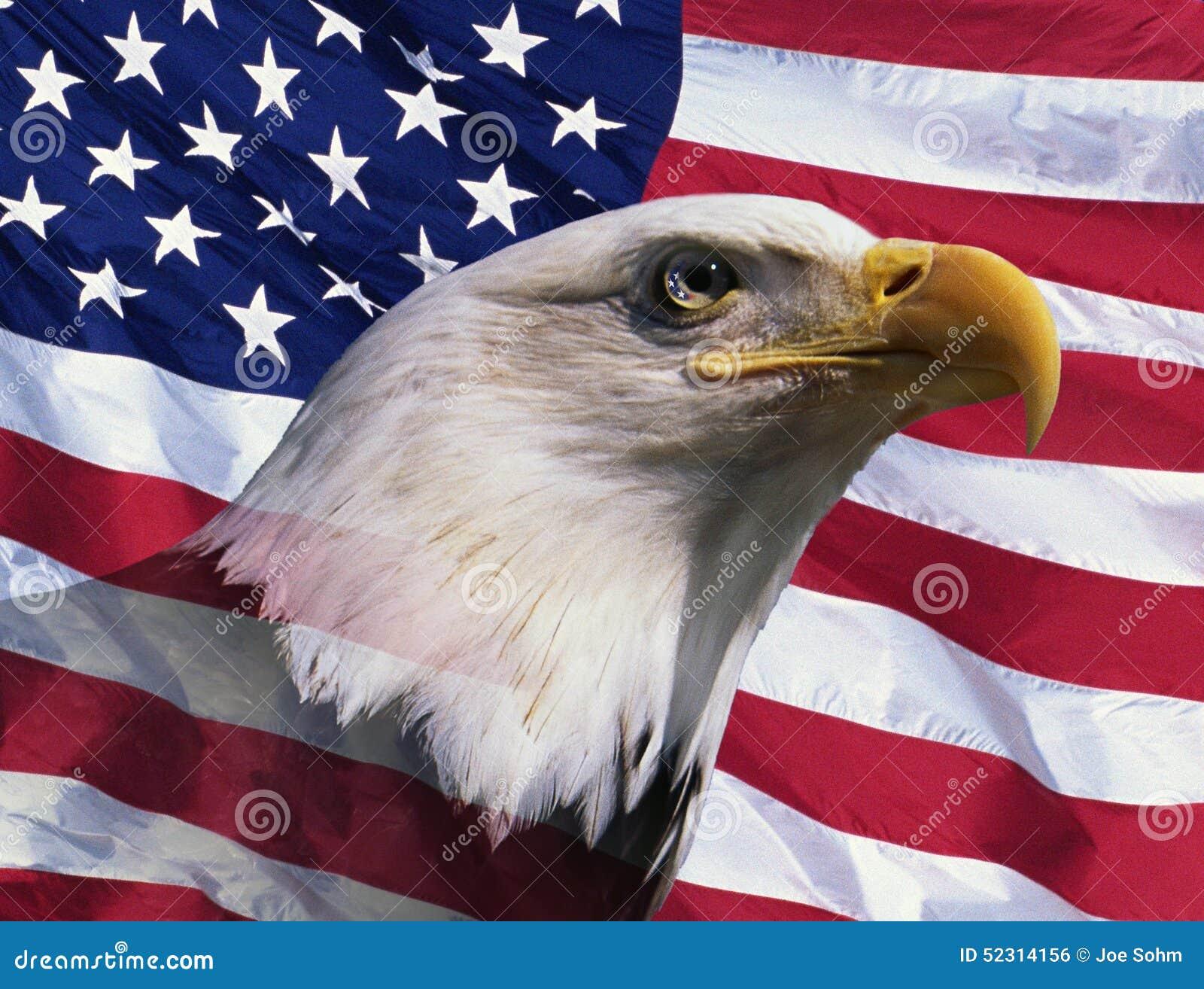 Montaggio della foto: Aquila calva e bandiera americana americane