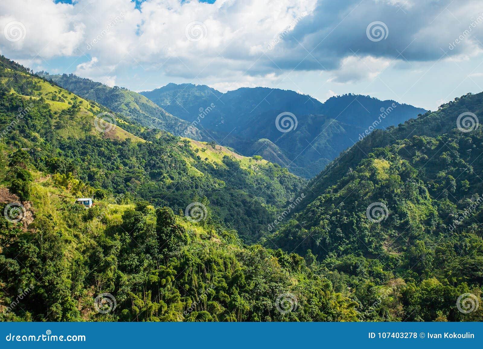 Montagne blu della Giamaica in cui il caffè è coltivato
