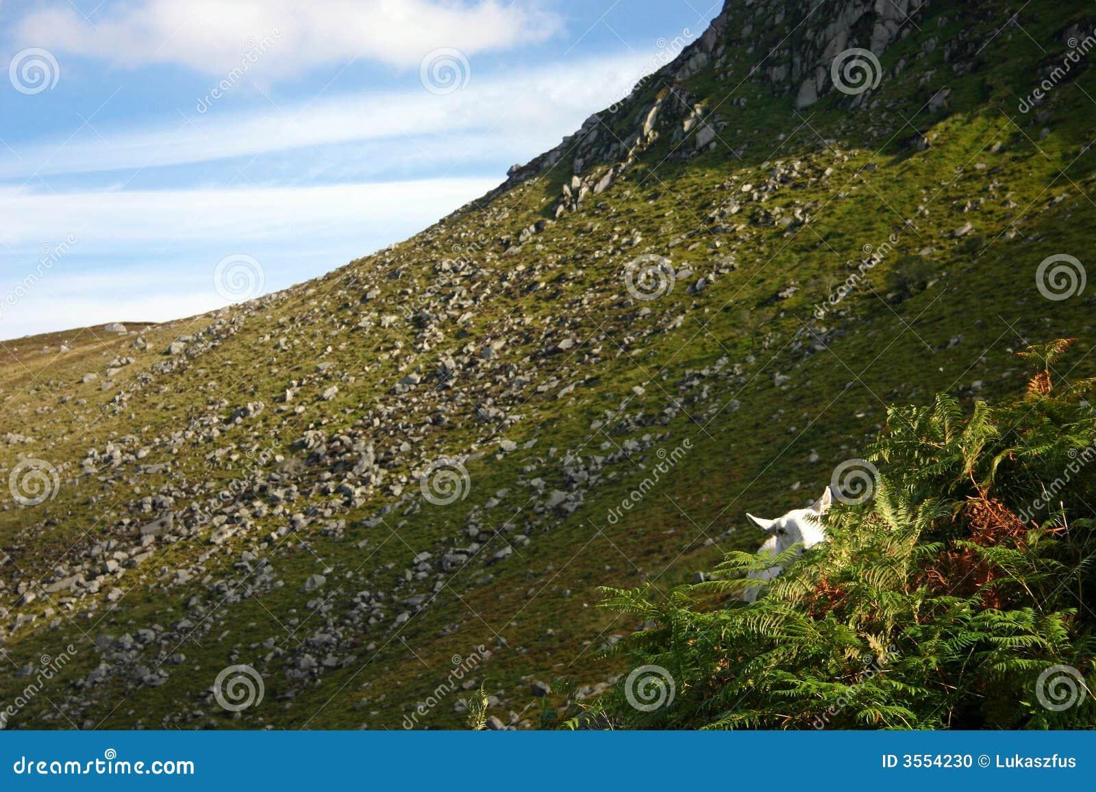 Montagne della Wicklow in Irlanda