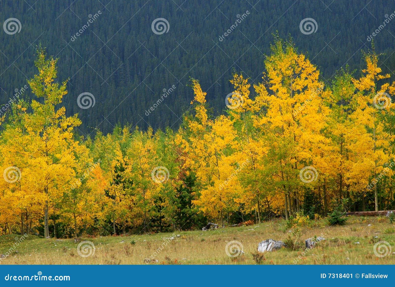 Montagne delle foreste di autunno