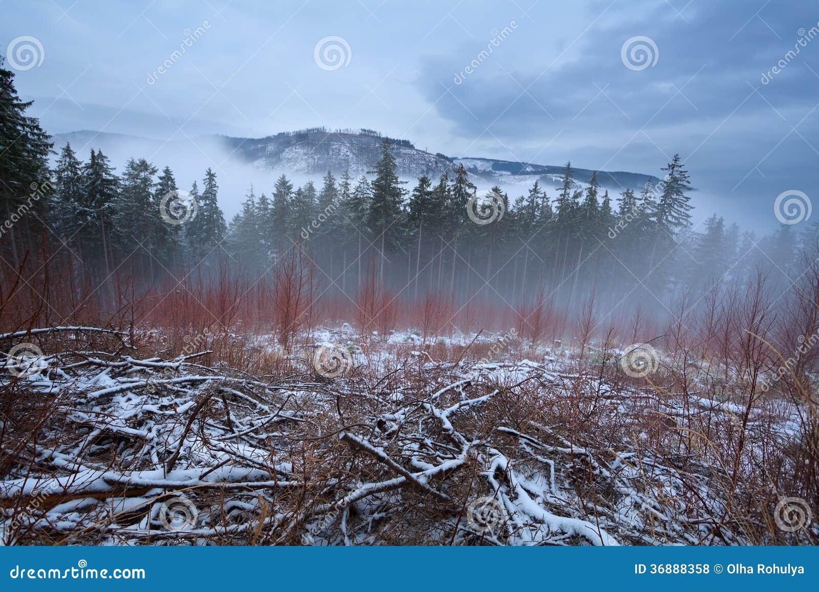 Download Montagne Di Harz Durante Il Giorno Di Inverno Nebbioso Fotografia Stock - Immagine di collina, stagionale: 36888358