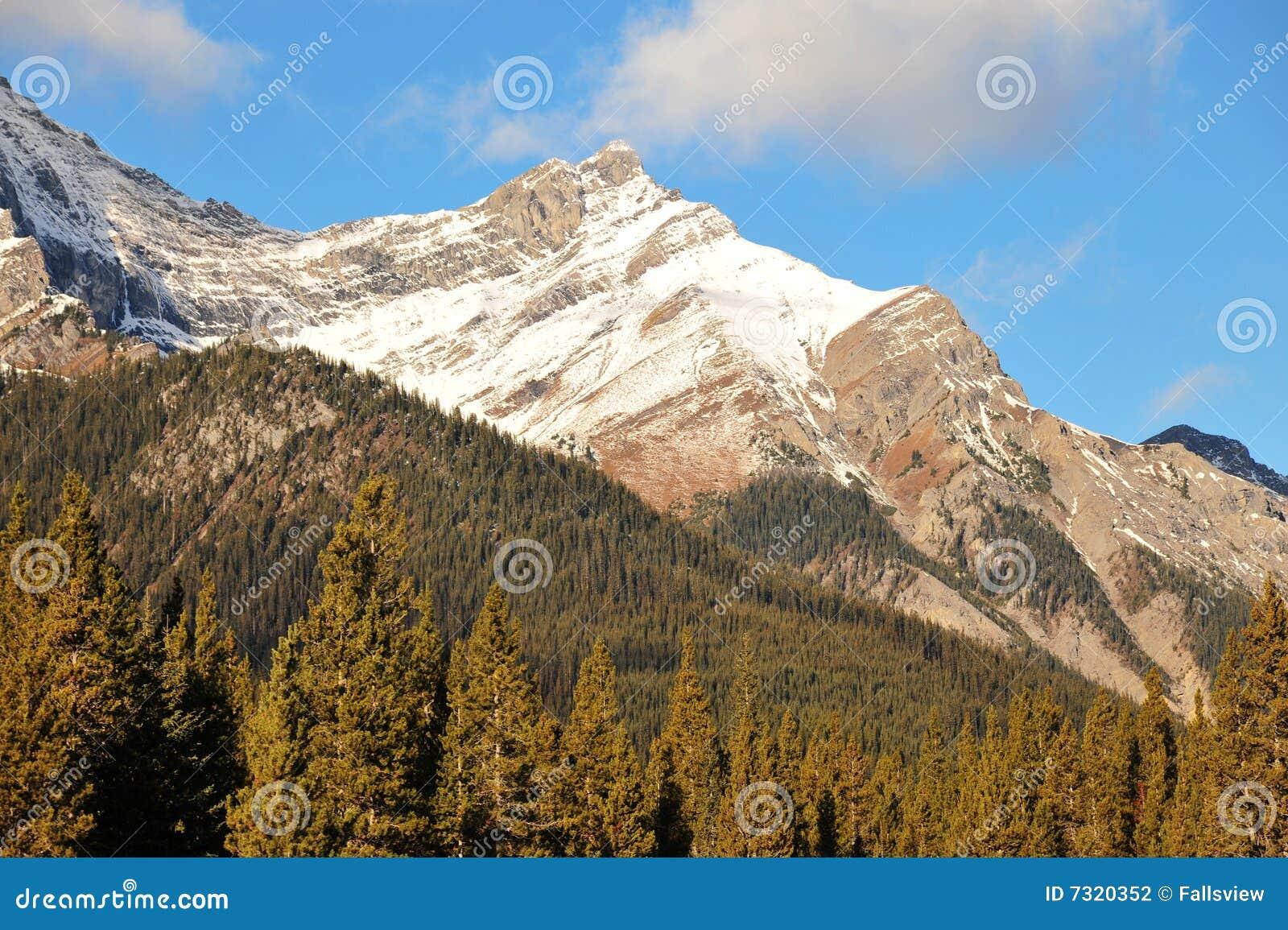 Montagne e foreste della neve