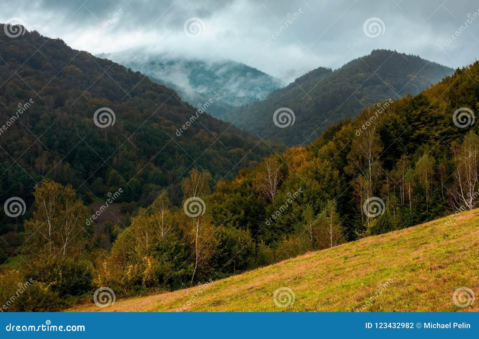 Montagnes boisées en automne
