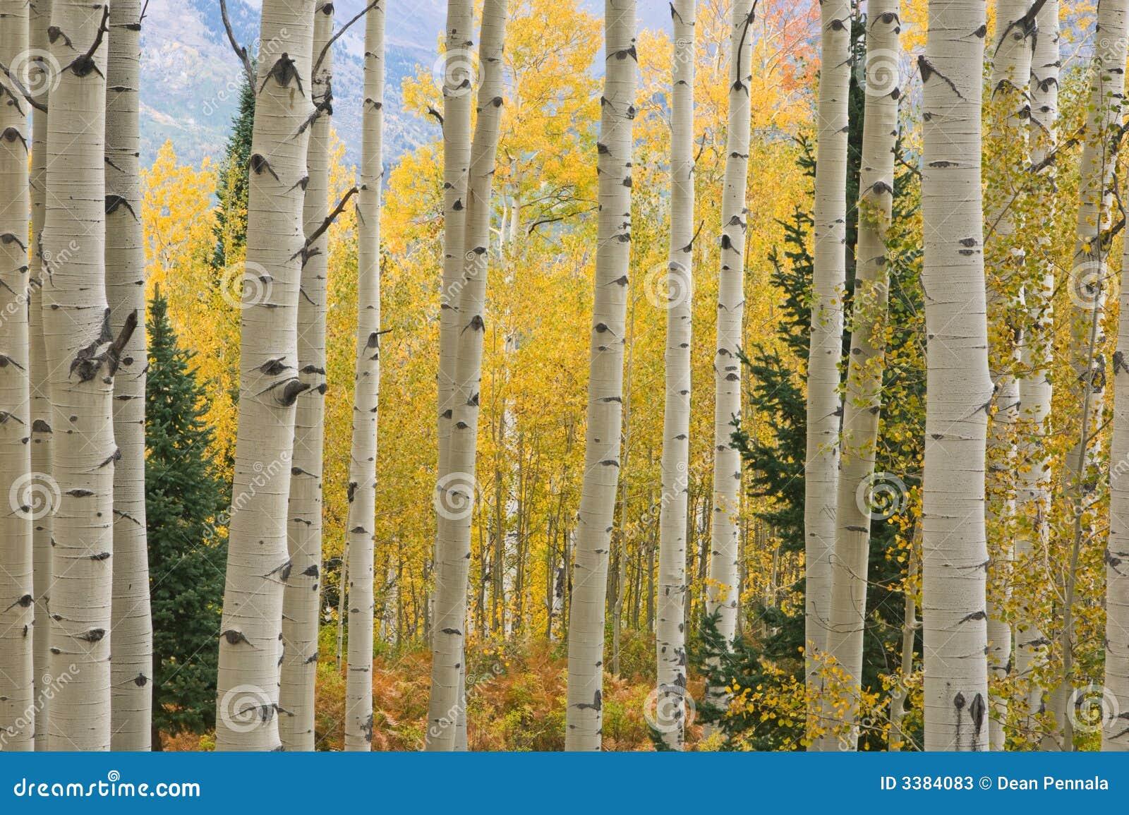 Montagnes d élans d Aspen d automne