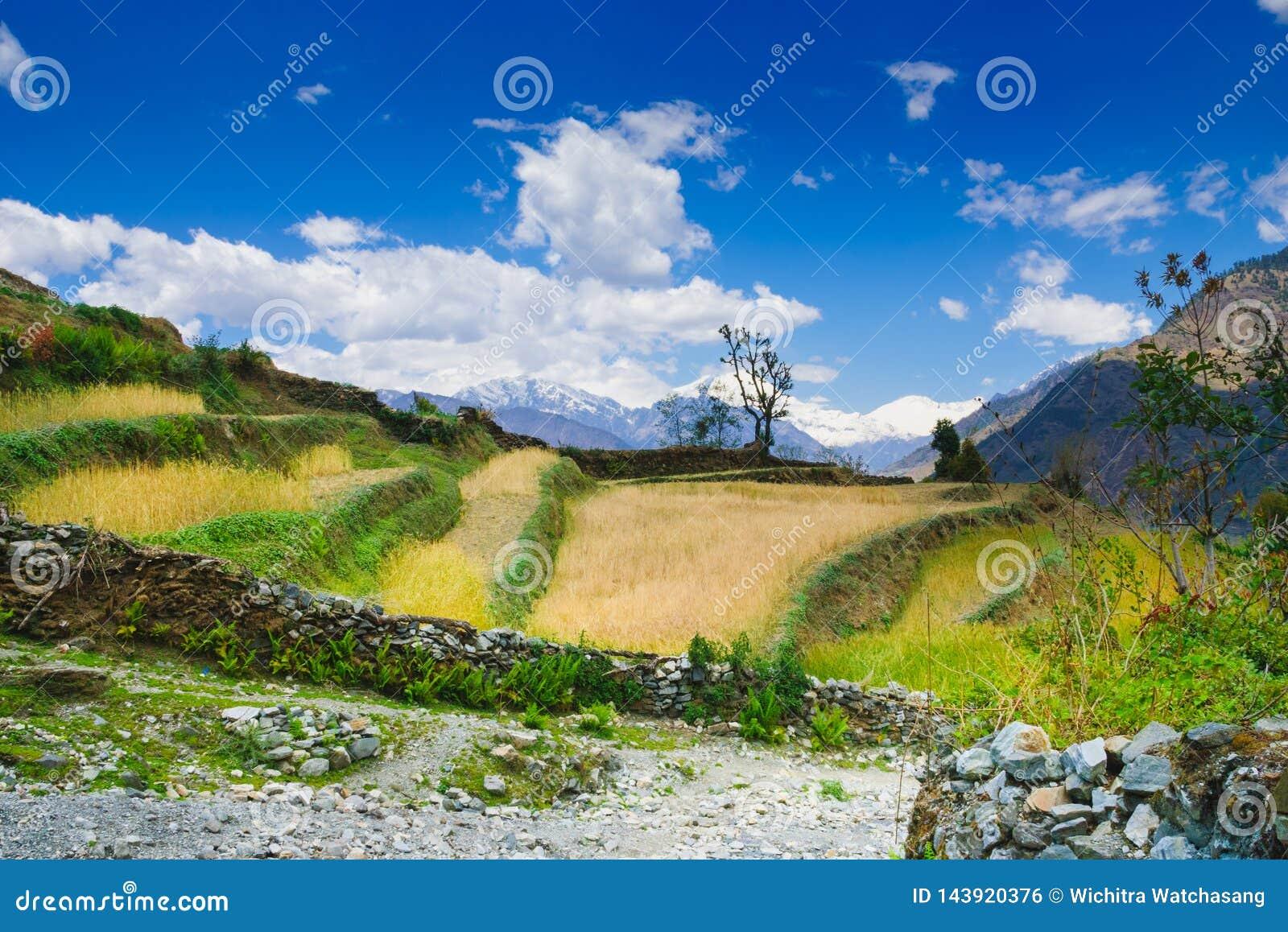 Montagnes de circuit d Annapurna, traînées populaires de trekking au Népal