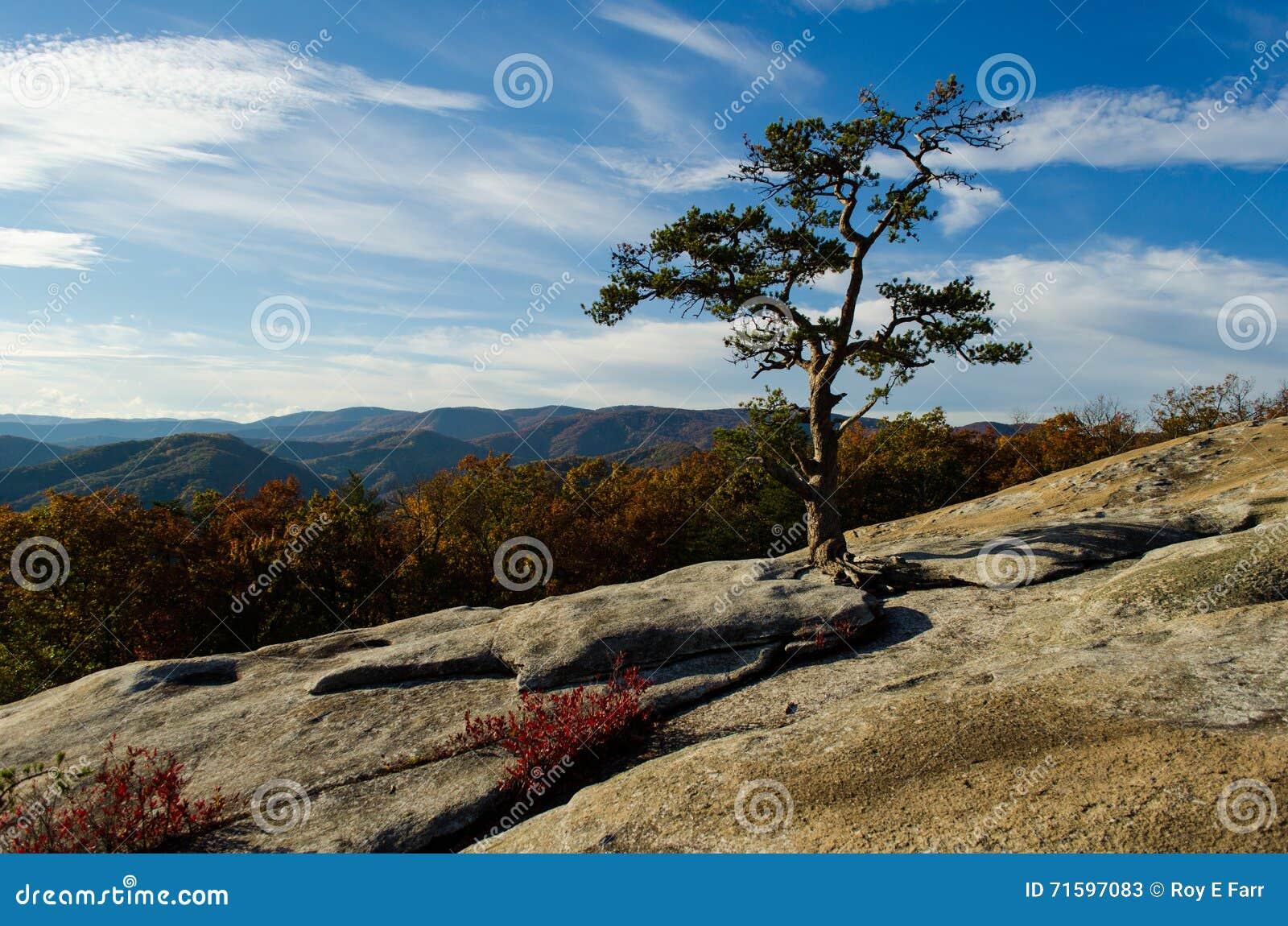 Montagnes de Ridge bleu