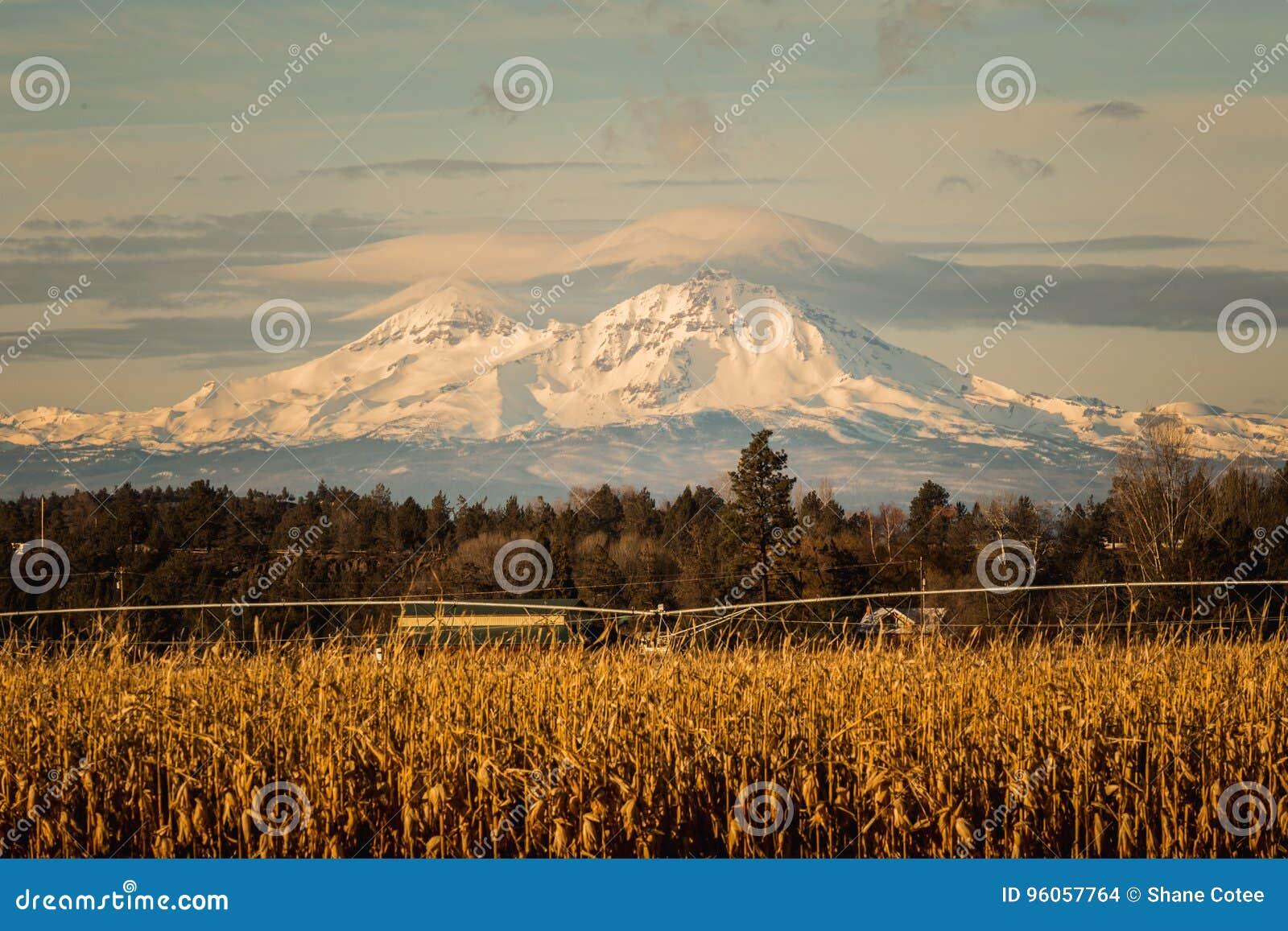 Montagnes majestueuses derrière le champ de maïs