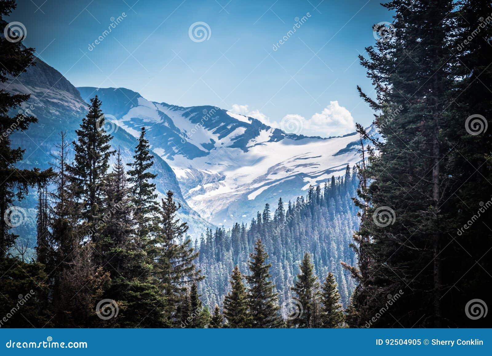 Montana Glacier National Park Jackson Glacier till och med träden