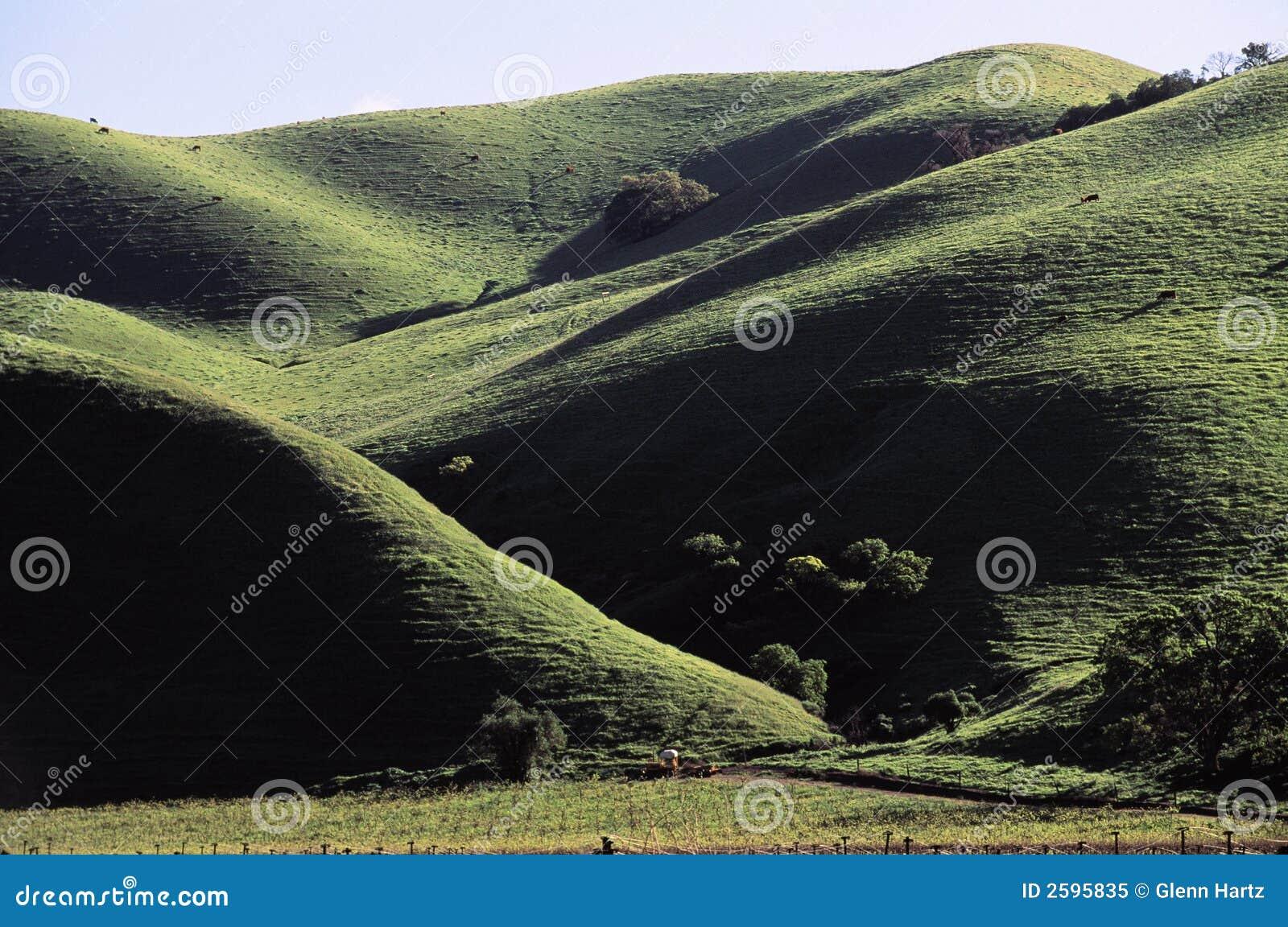 Montanhês verde de rolamento