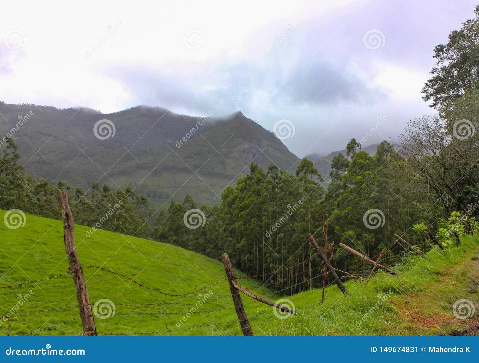 Montanha com floresta verde