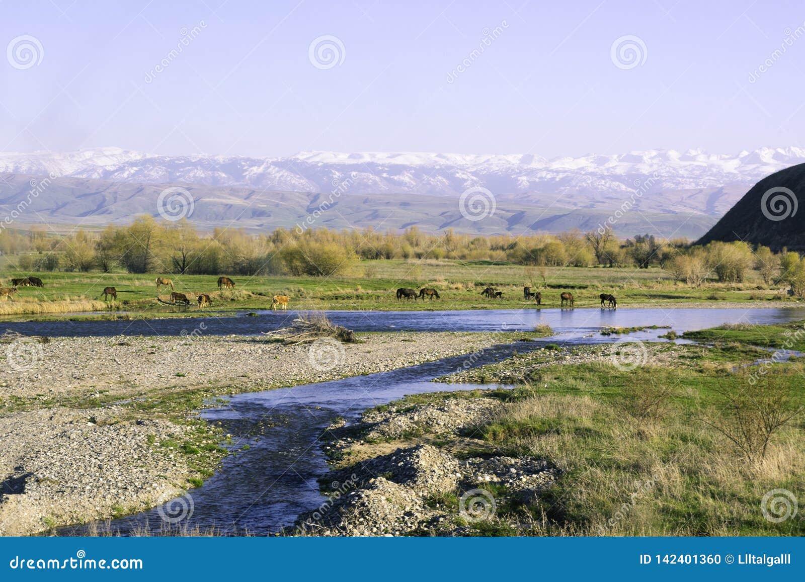 Montanhas 'Alatau ' Os cavalos pastam Fluxos do rio verão Região do ` s de Alma-Ata 'Região de Zhetysu '