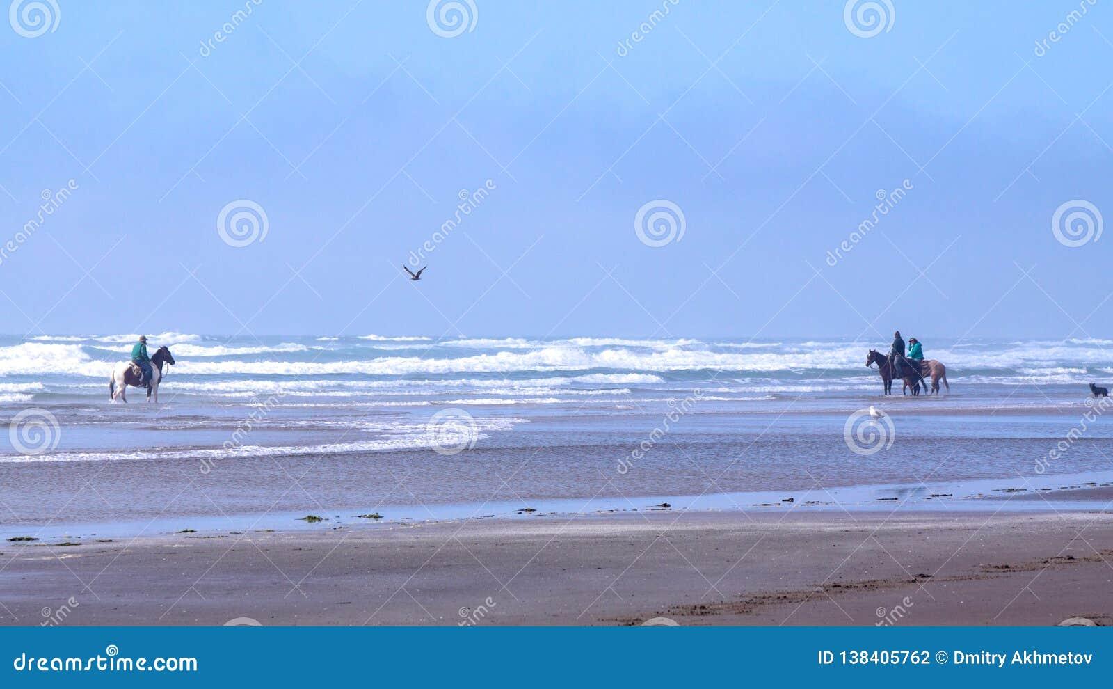 Montar a caballo trasero del caballo en una playa cerca del cabo Meares, Oregon