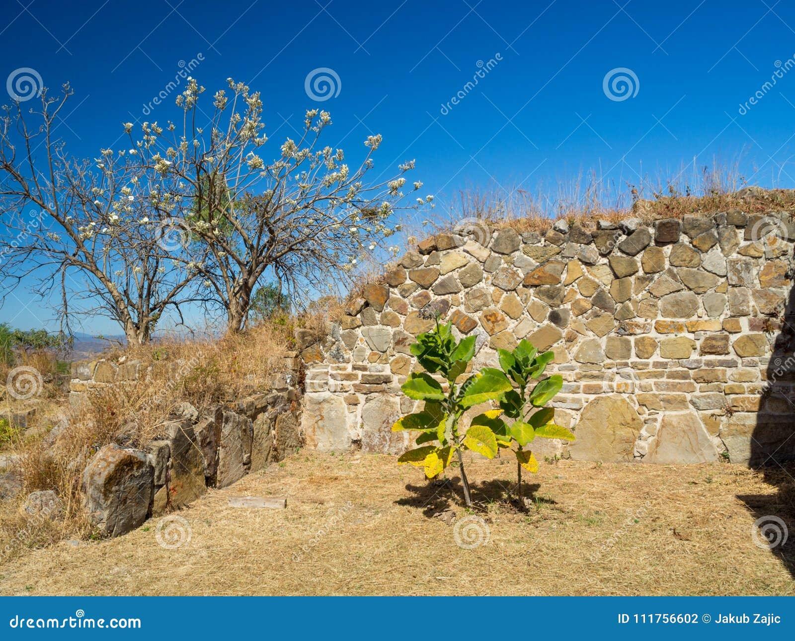 Monte Alban, Oaxaca, México, Suramérica: [Las ruinas más grandes de la ciudad antigua en la cima de la montaña, UNES de Zapotec