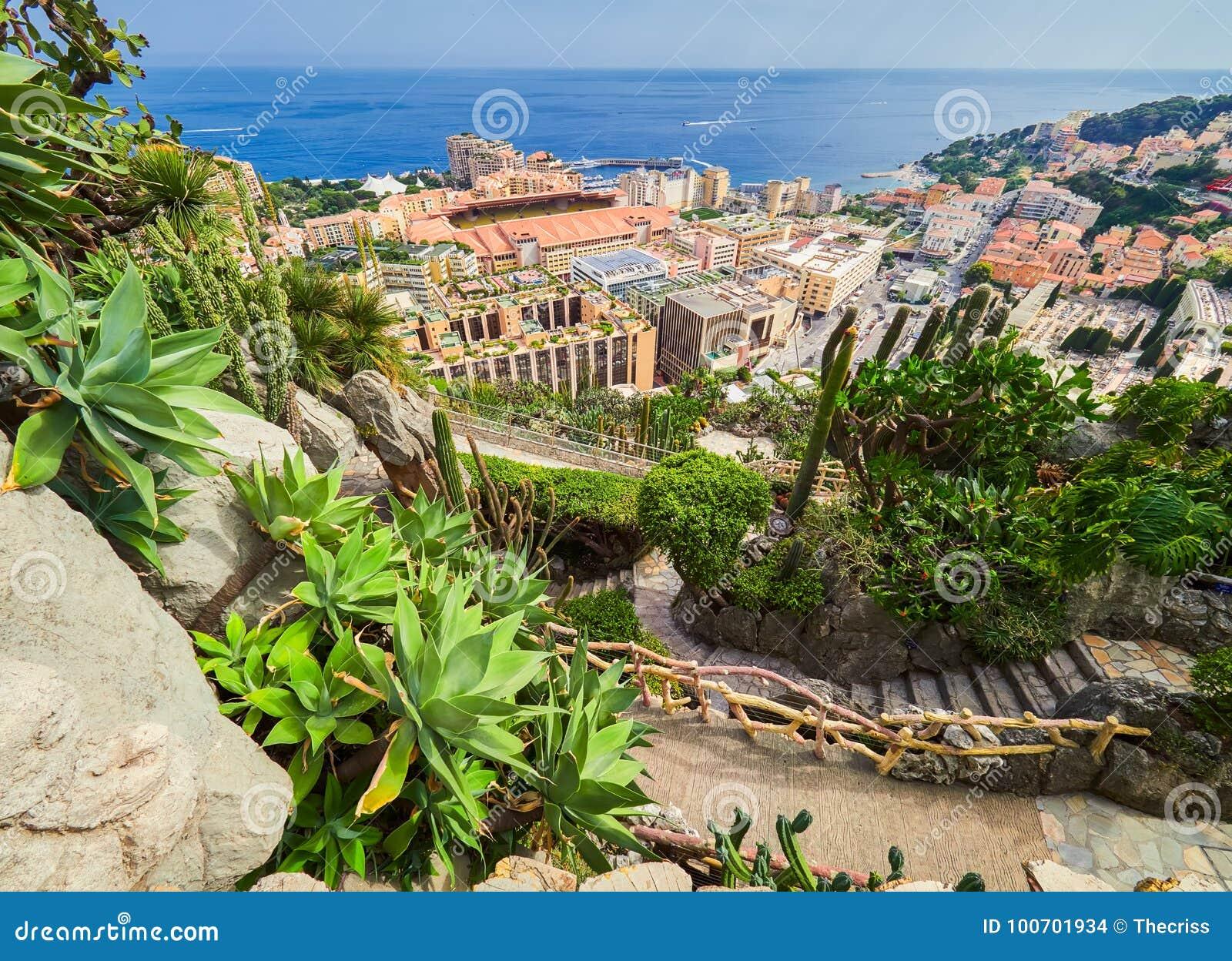 MONTE CARLO, MONACO - 10 AOÛT 2017 : Fragment d un jardin des cactus et des succulents au Monaco Jardin Exotique de Monaco