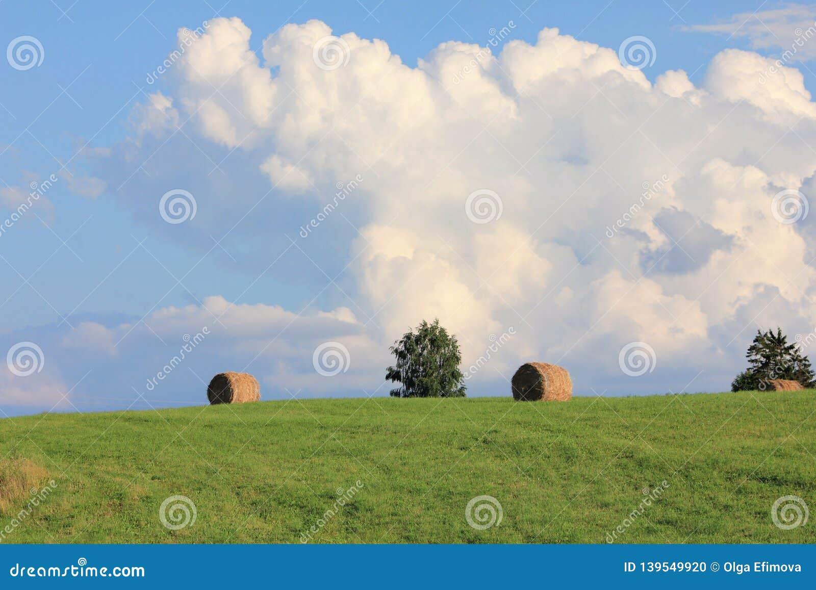 Monte de feno secos após a colheita em um campo verde do verão com nuvens grandes e o céu azul