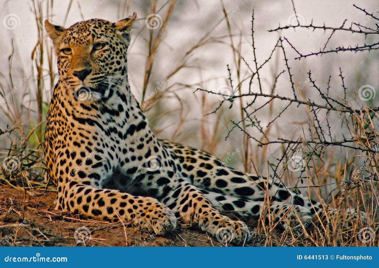 Monte do leopardo