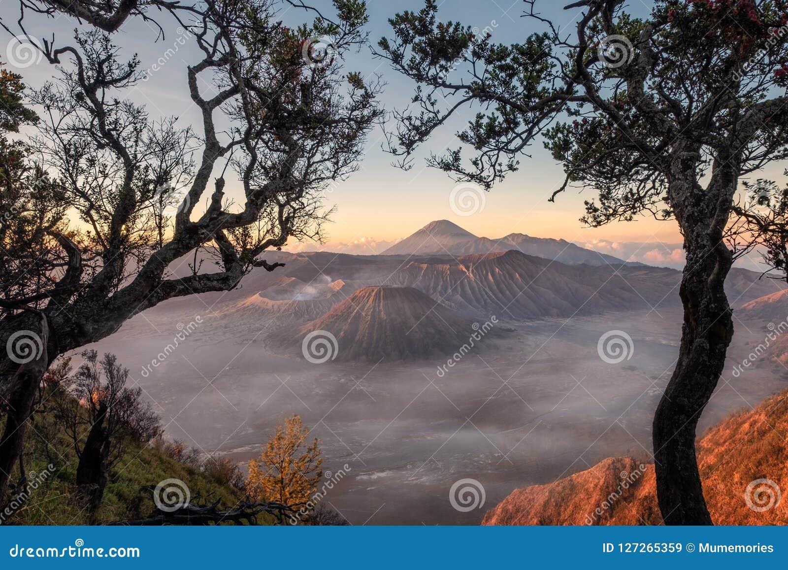 Monte el volcán un active con el marco del árbol en la salida del sol