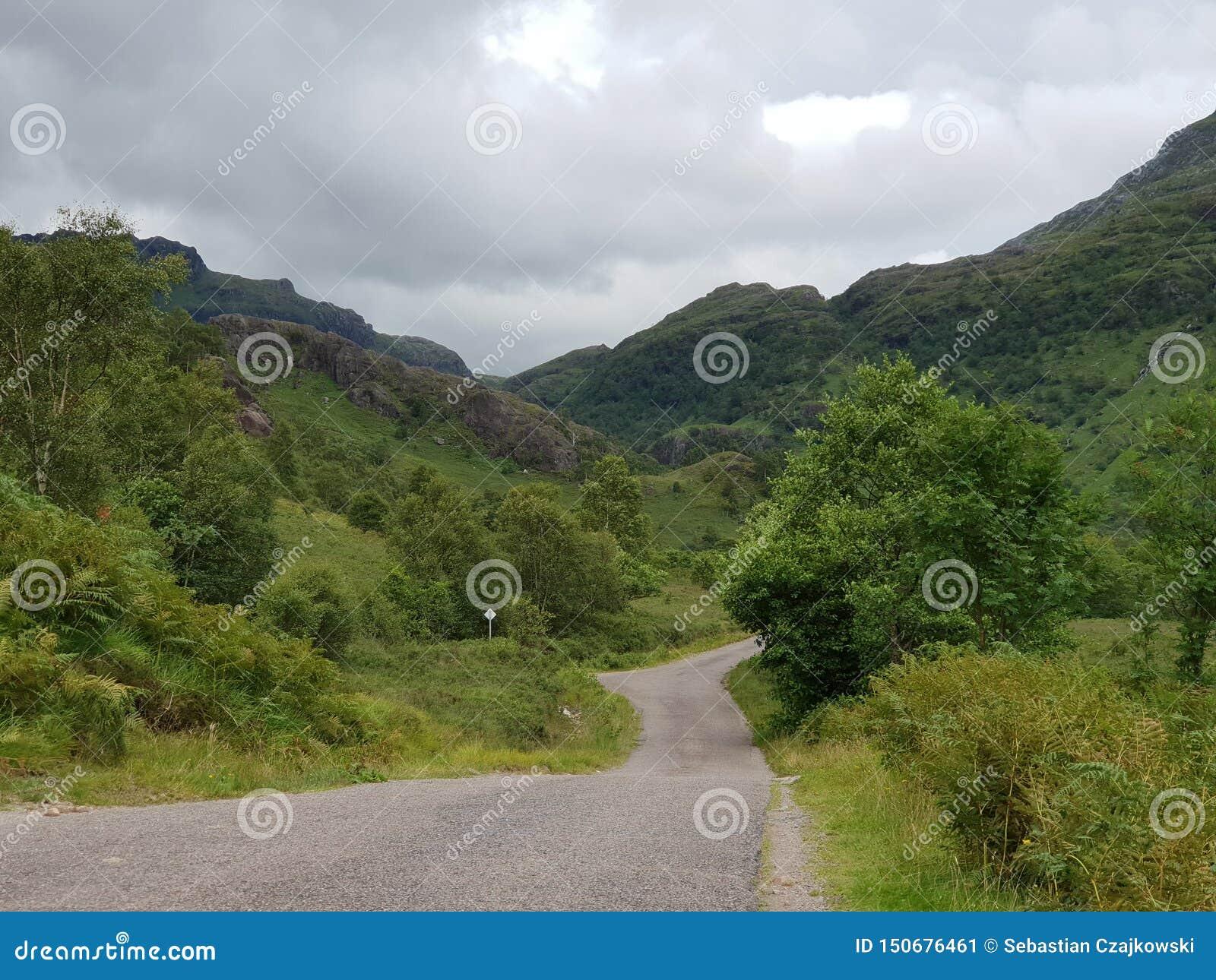 Montering för skogväg, natur