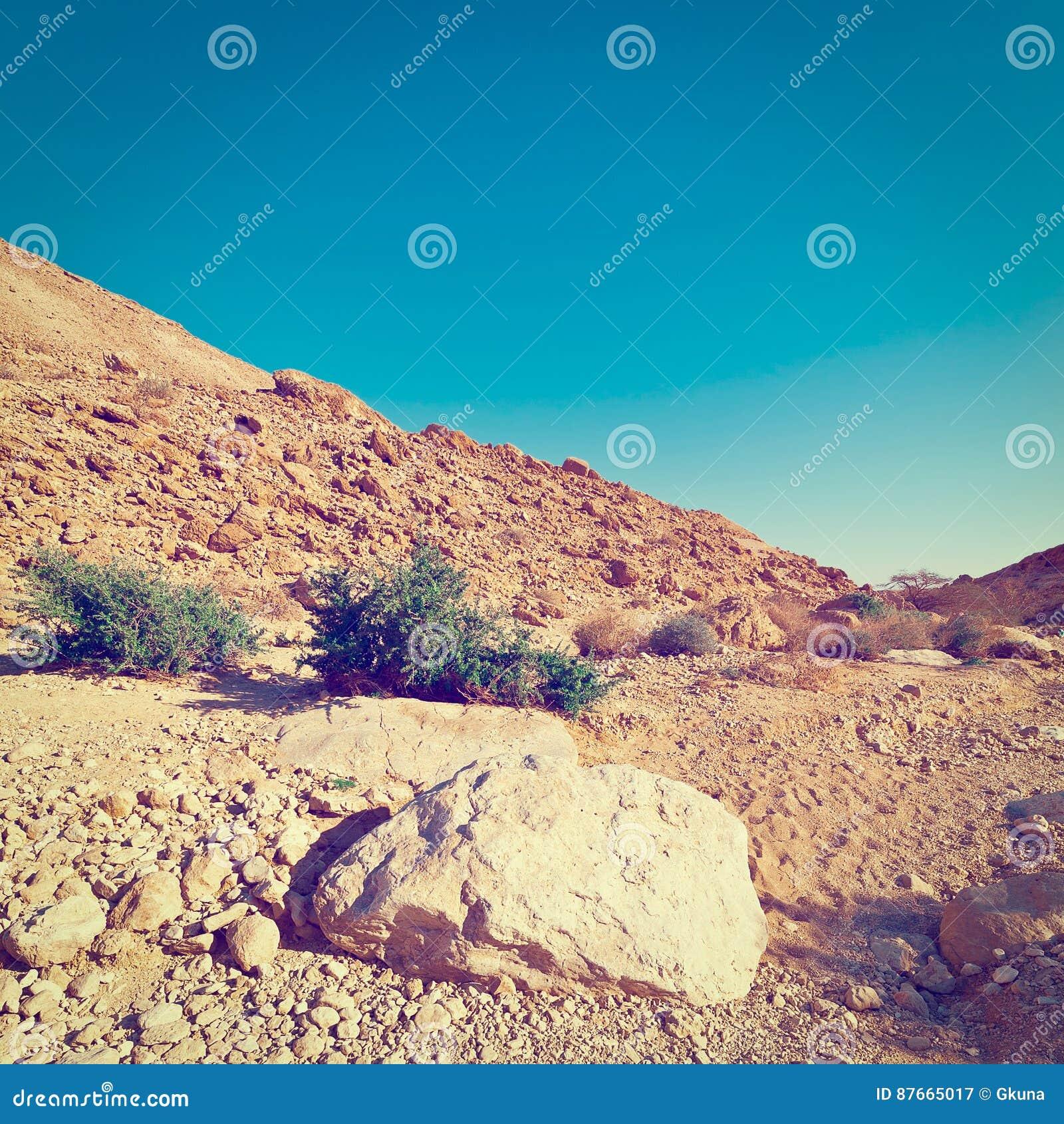 Montes rochosos