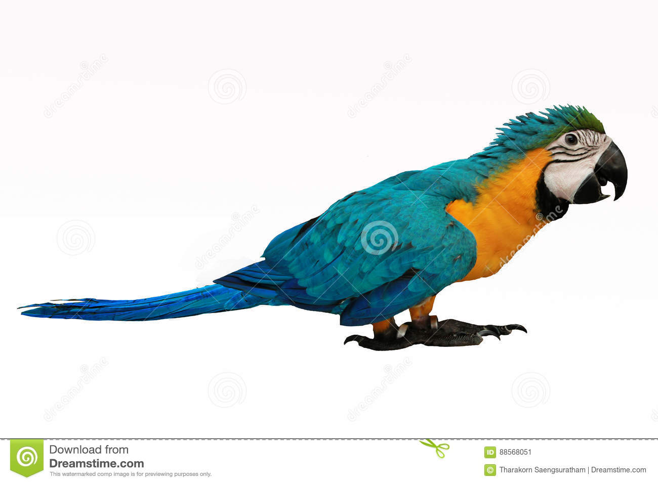 4 Months Blue and Yellow Macaw lovely bright children`s emotions