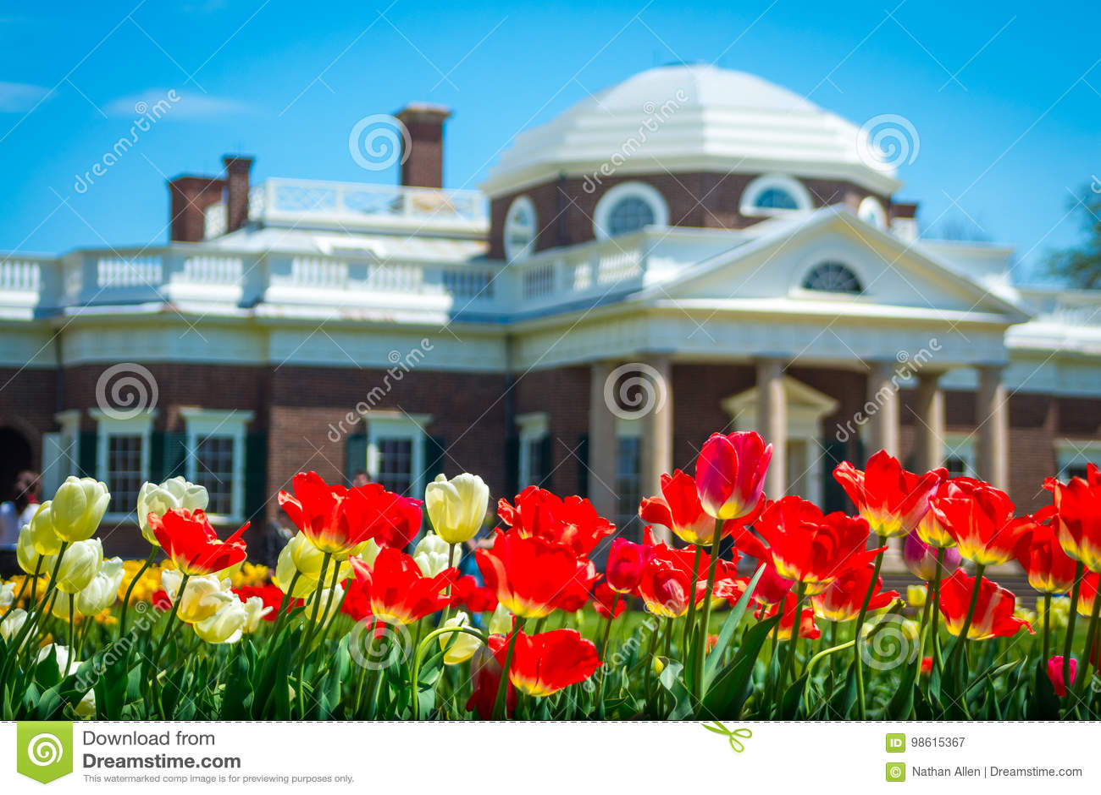 Monticello tulipany w wiośnie