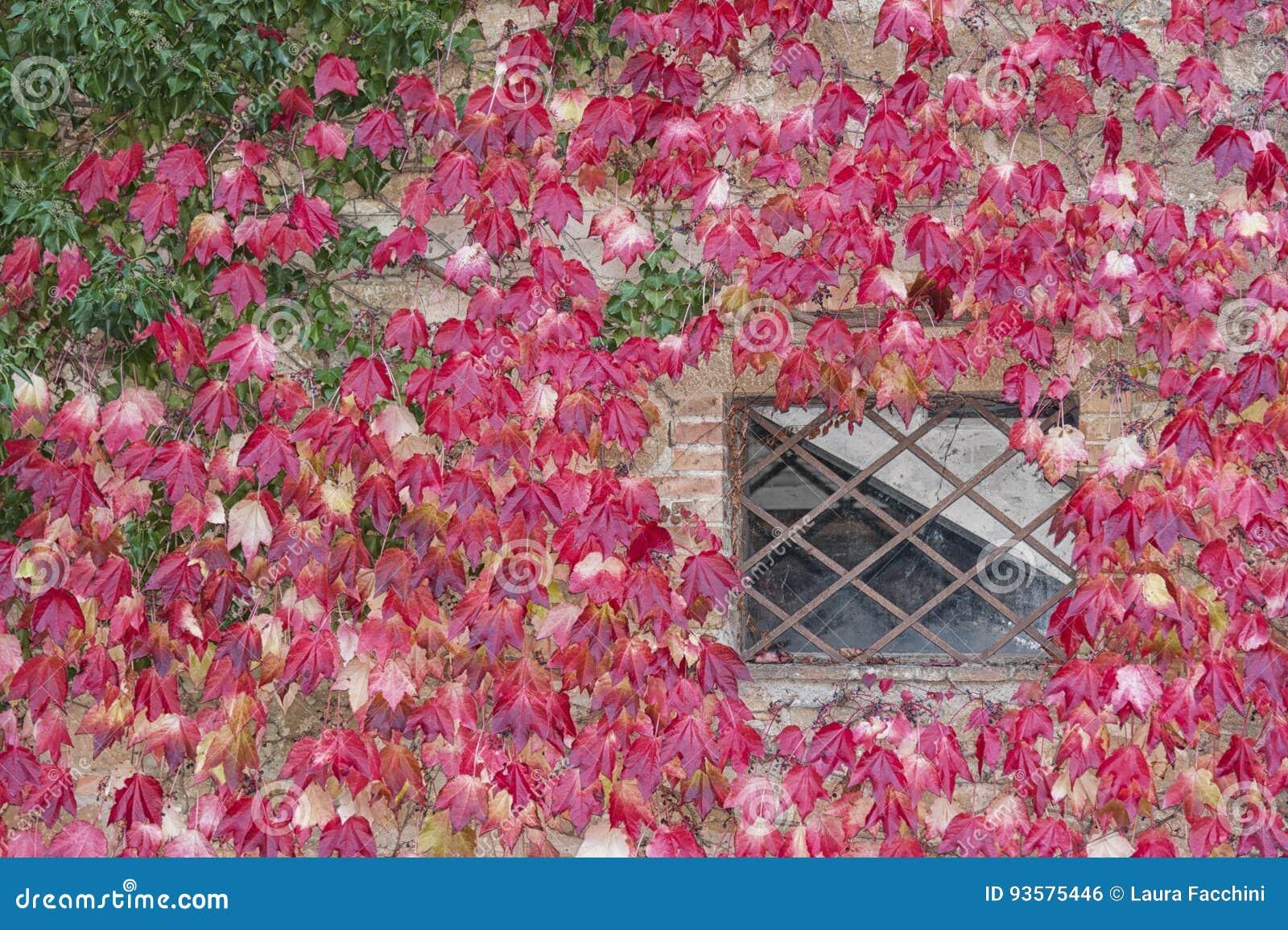 Montichiello l 39 italia il 29 ottobre 2016 via calma in for Imposte finestre