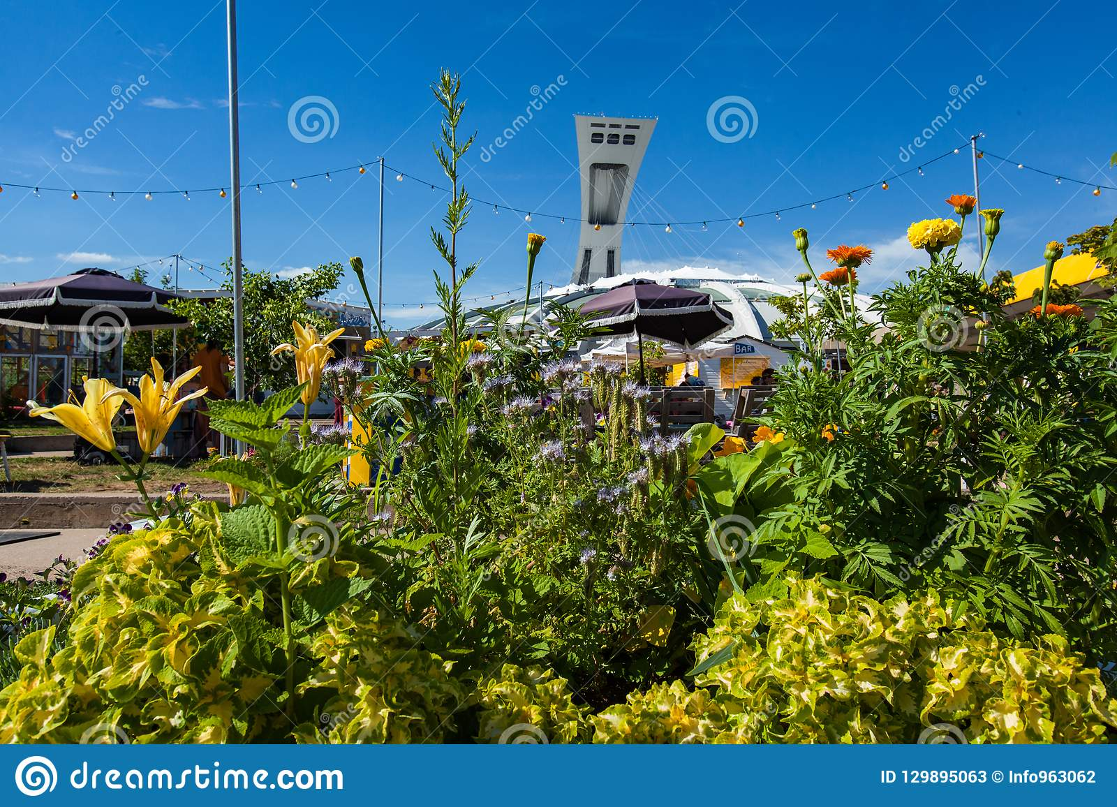 Montreal s Olympic Stadium as seen from behind a colorful flower arrangement