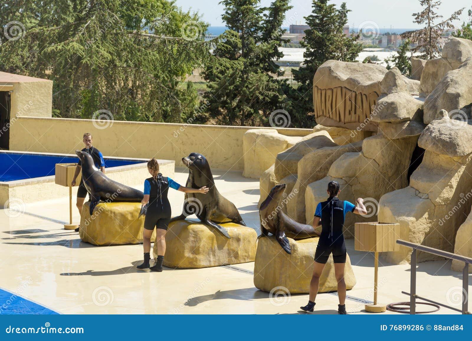 Montrez avec Marine Seals dans Marineland, Espagne