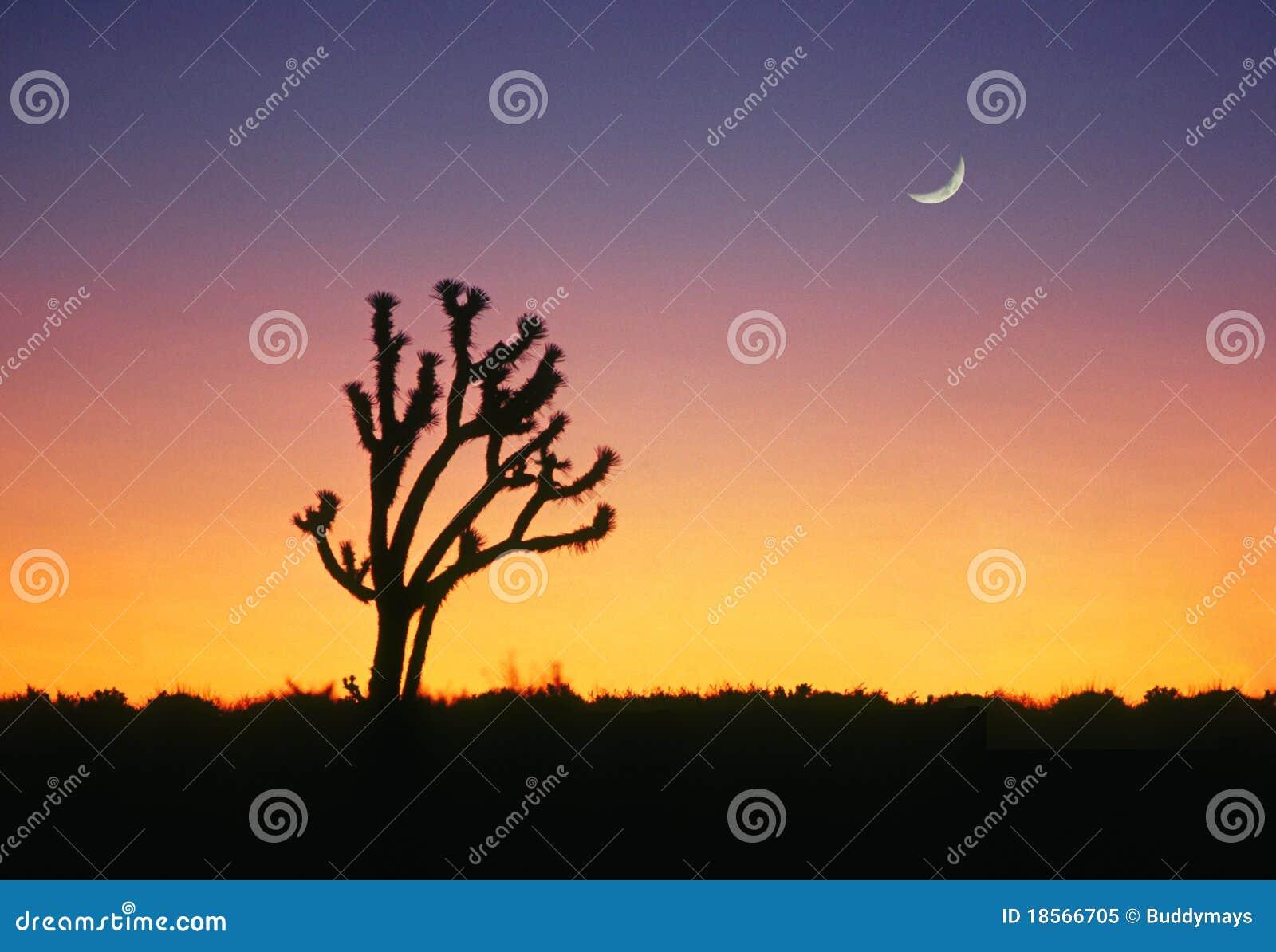 Monument national d arbre de Joshua