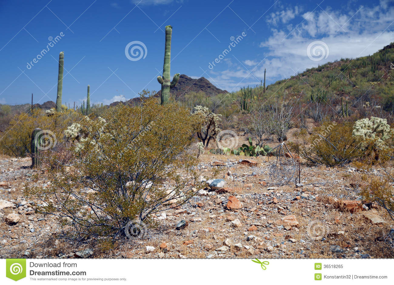 Monument national de tuyau d organe, Arizona, Etats-Unis
