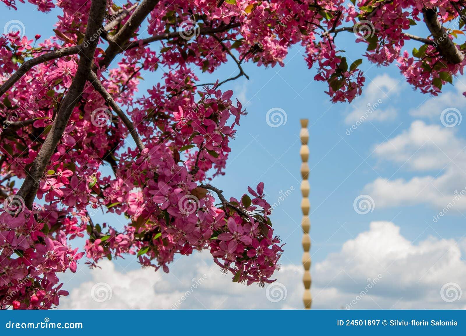 monument sans fin de fléau et fleur rose d'arbre photographie