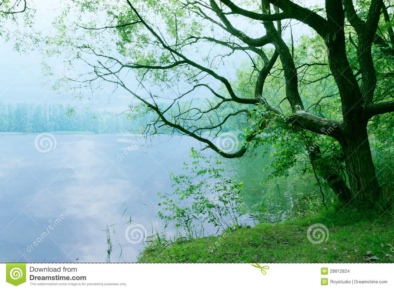 Moody Landscape With Old Tree And Lake In The Morning As