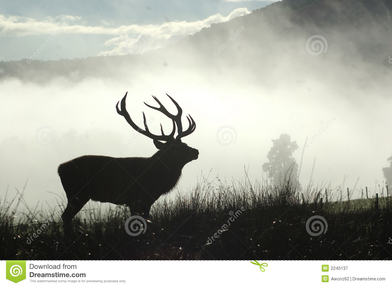 Moody stag