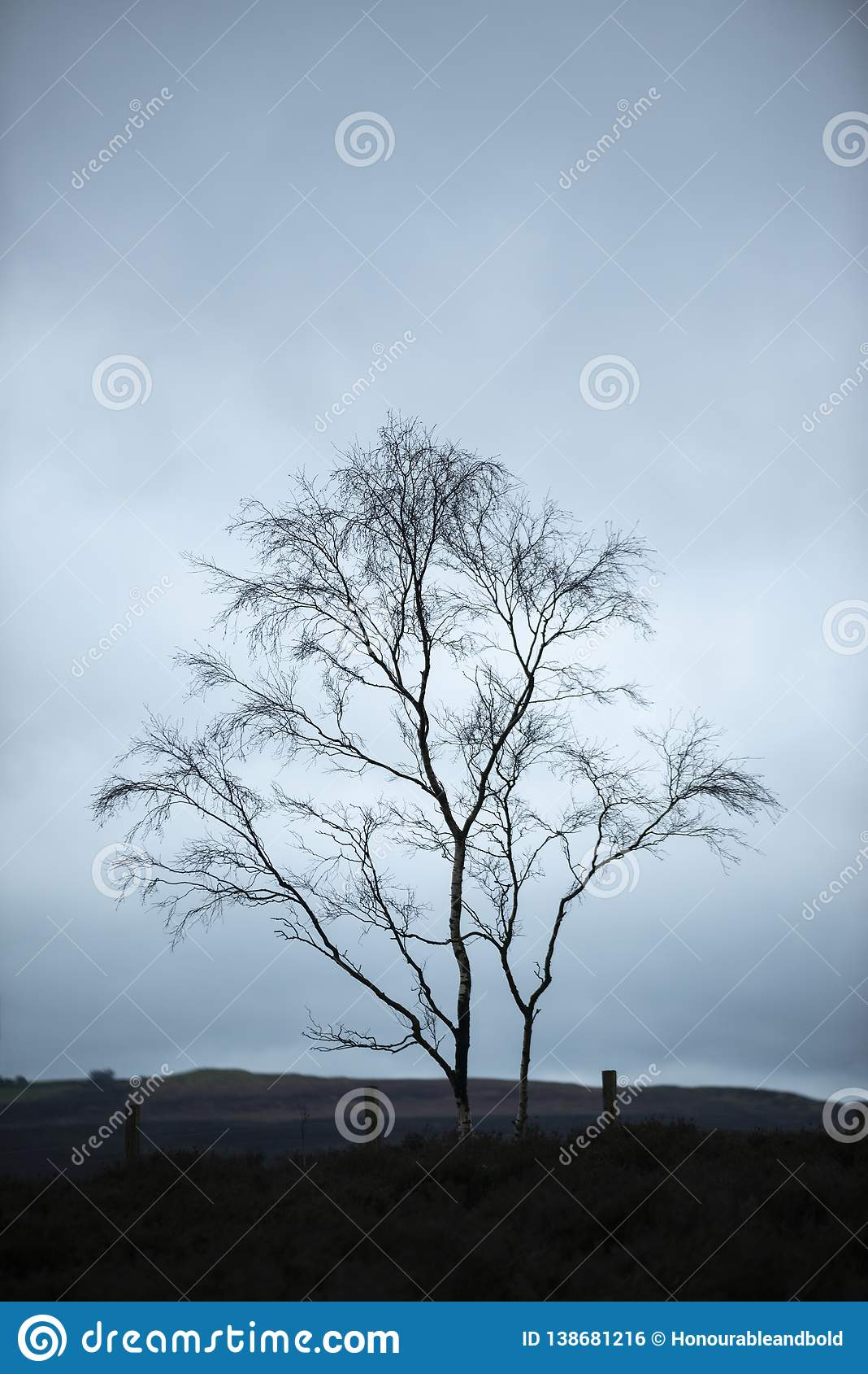Moody Winter landscape image of skeletal trees in Peak District in England against dramatic dark sky
